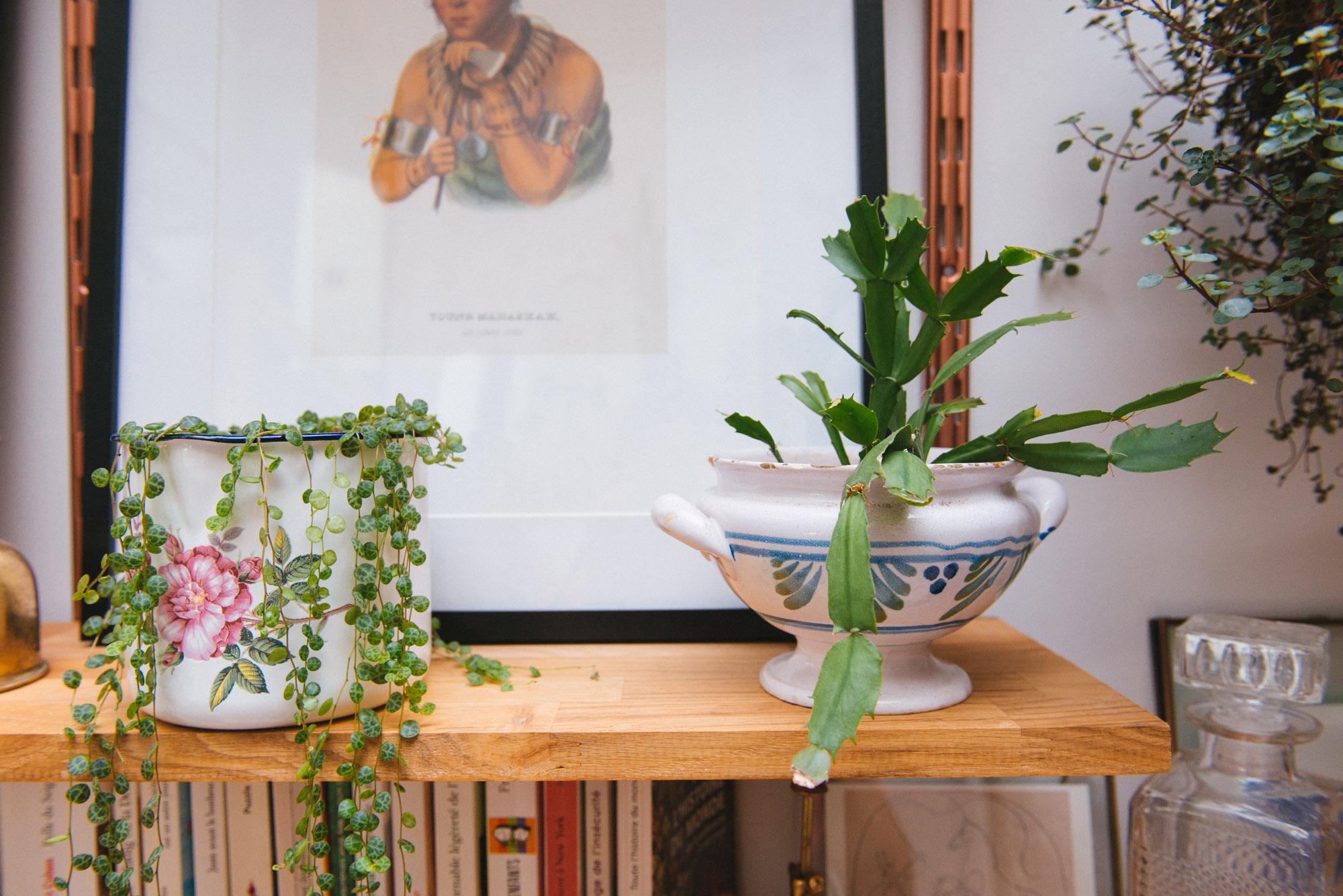 peperomia cactus de Noël plantes vertes végétalisation pots vintage