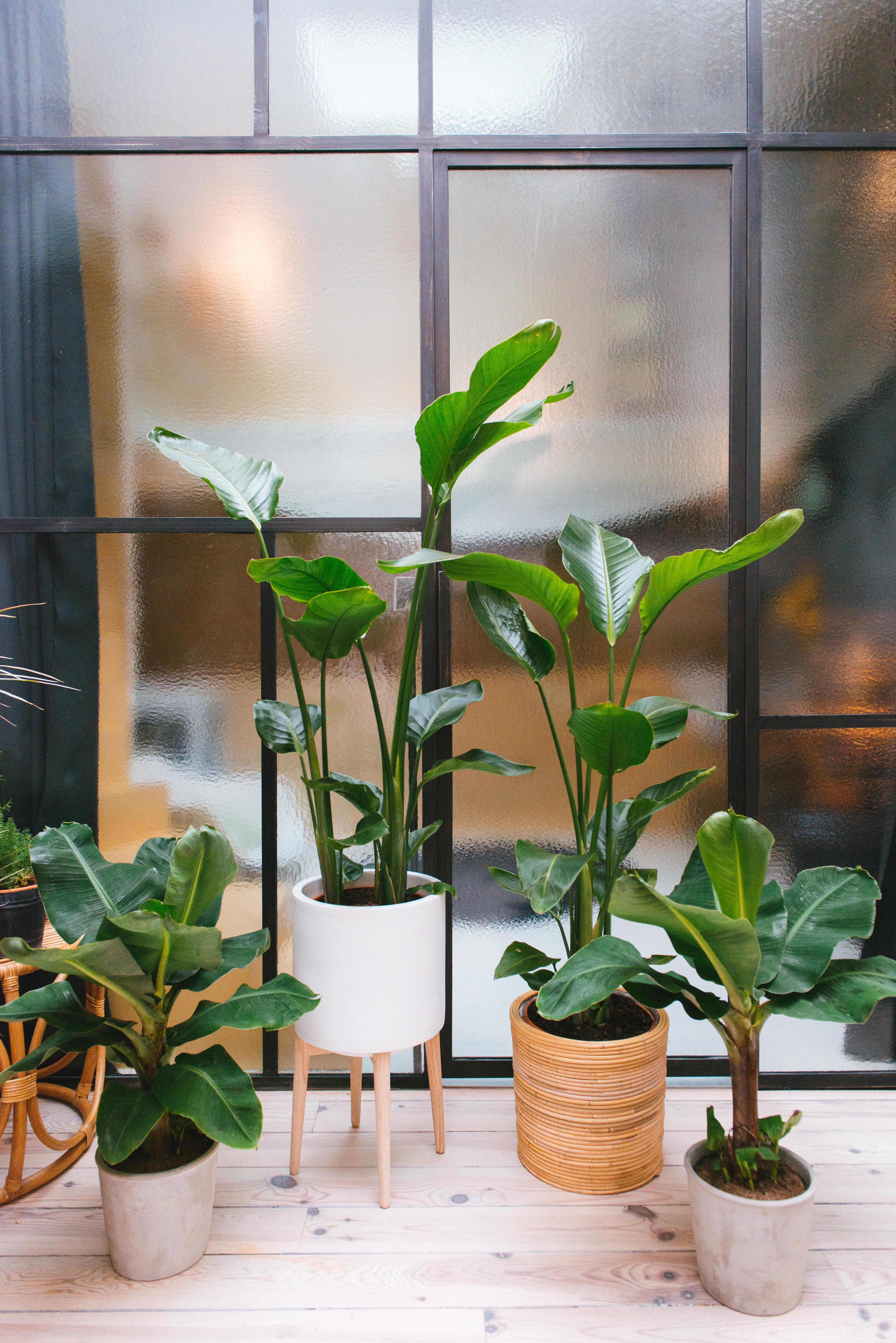 plantes végétalisation décoration