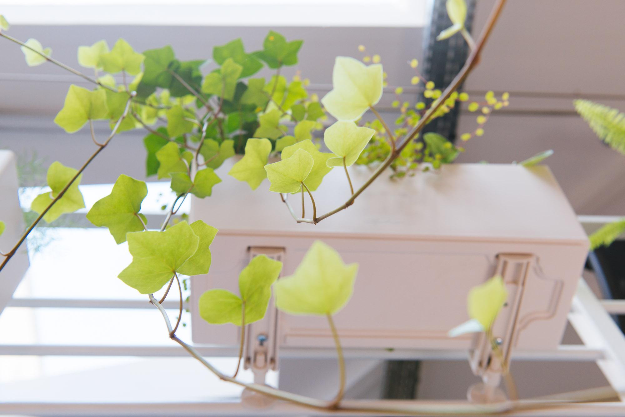 jardinières bureau lièrre végétalisation bureaux décoration végétale d'intérieur