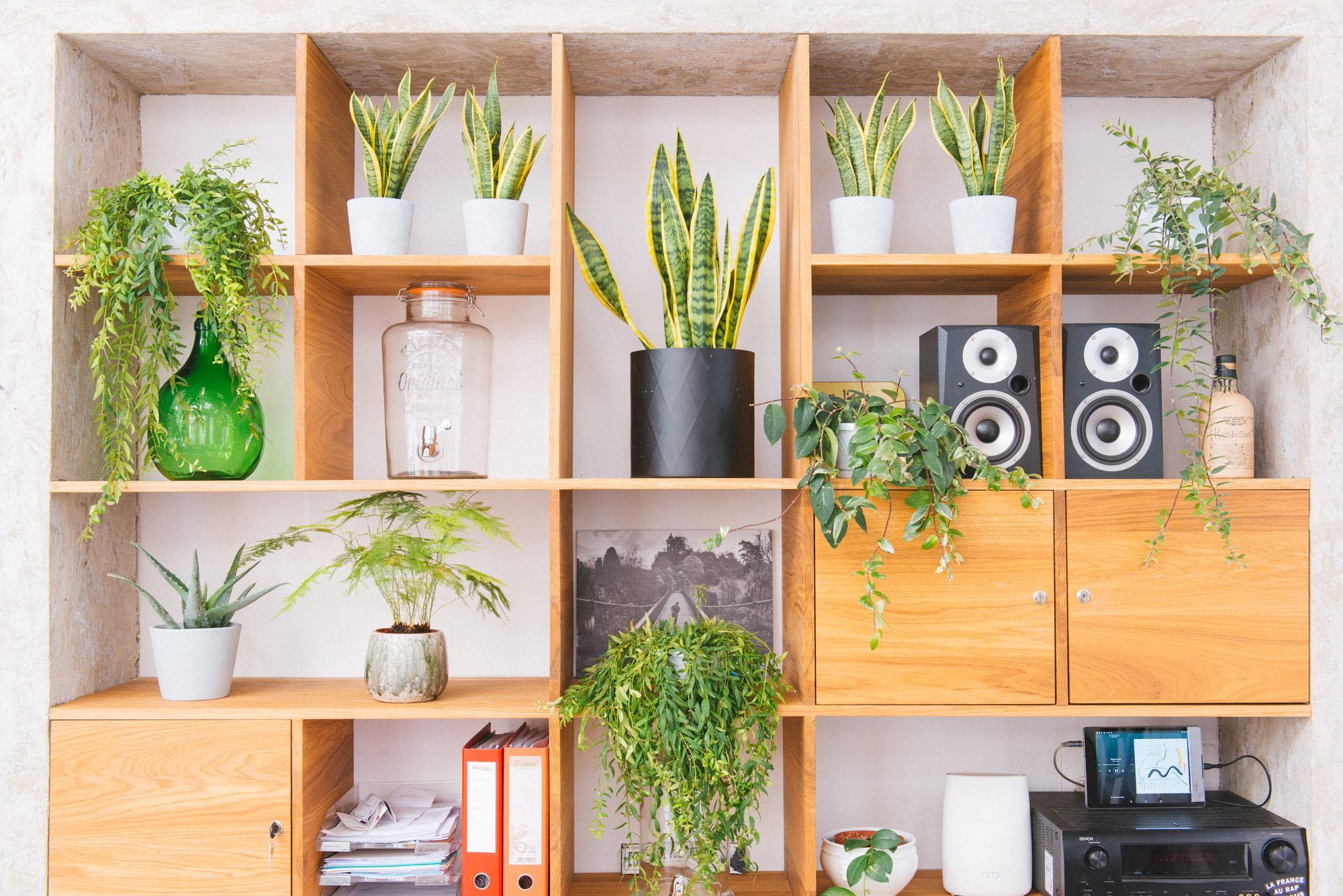 bureau végétalisation plantes d'intérieur