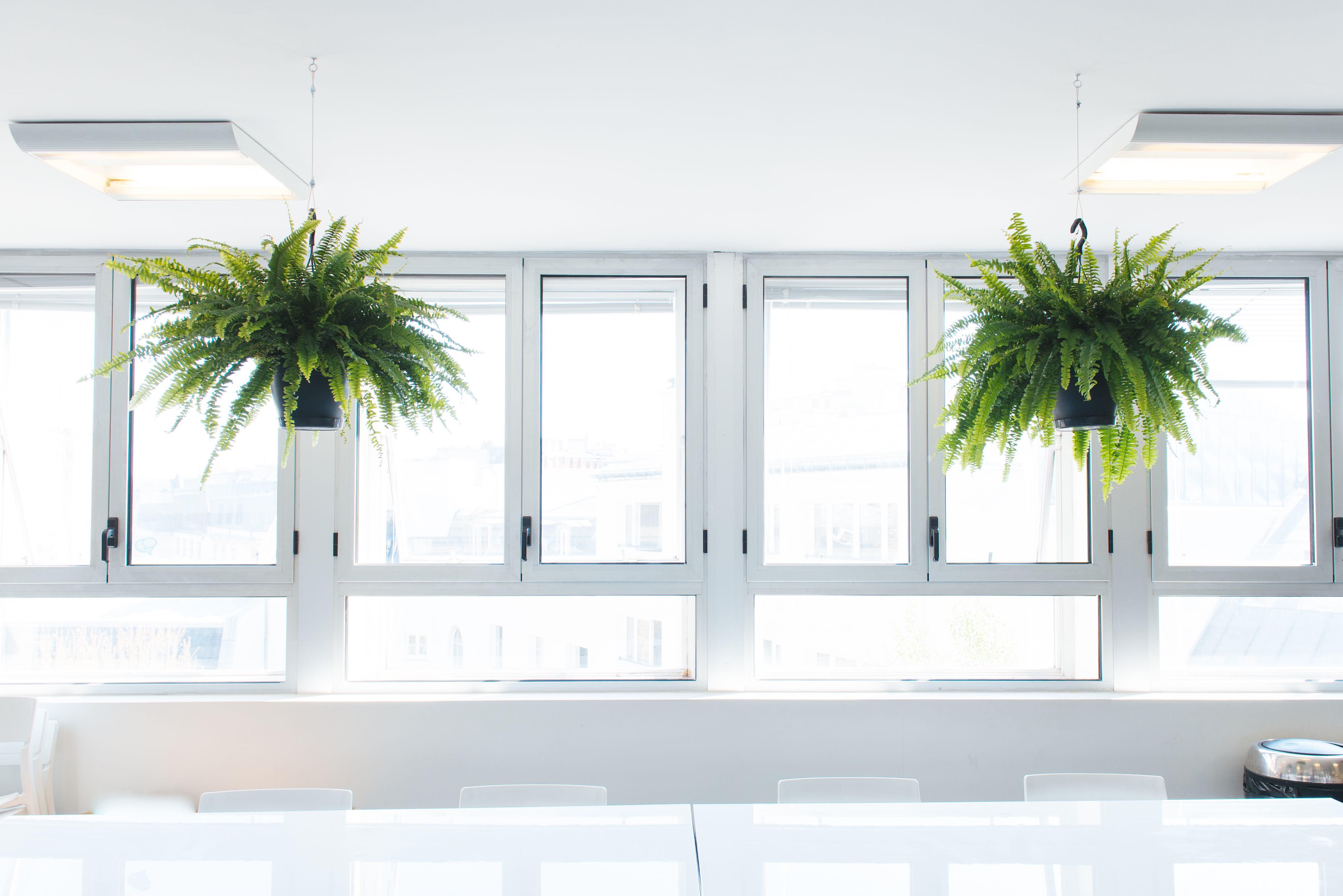 plantes vertes végétalisation bureaux