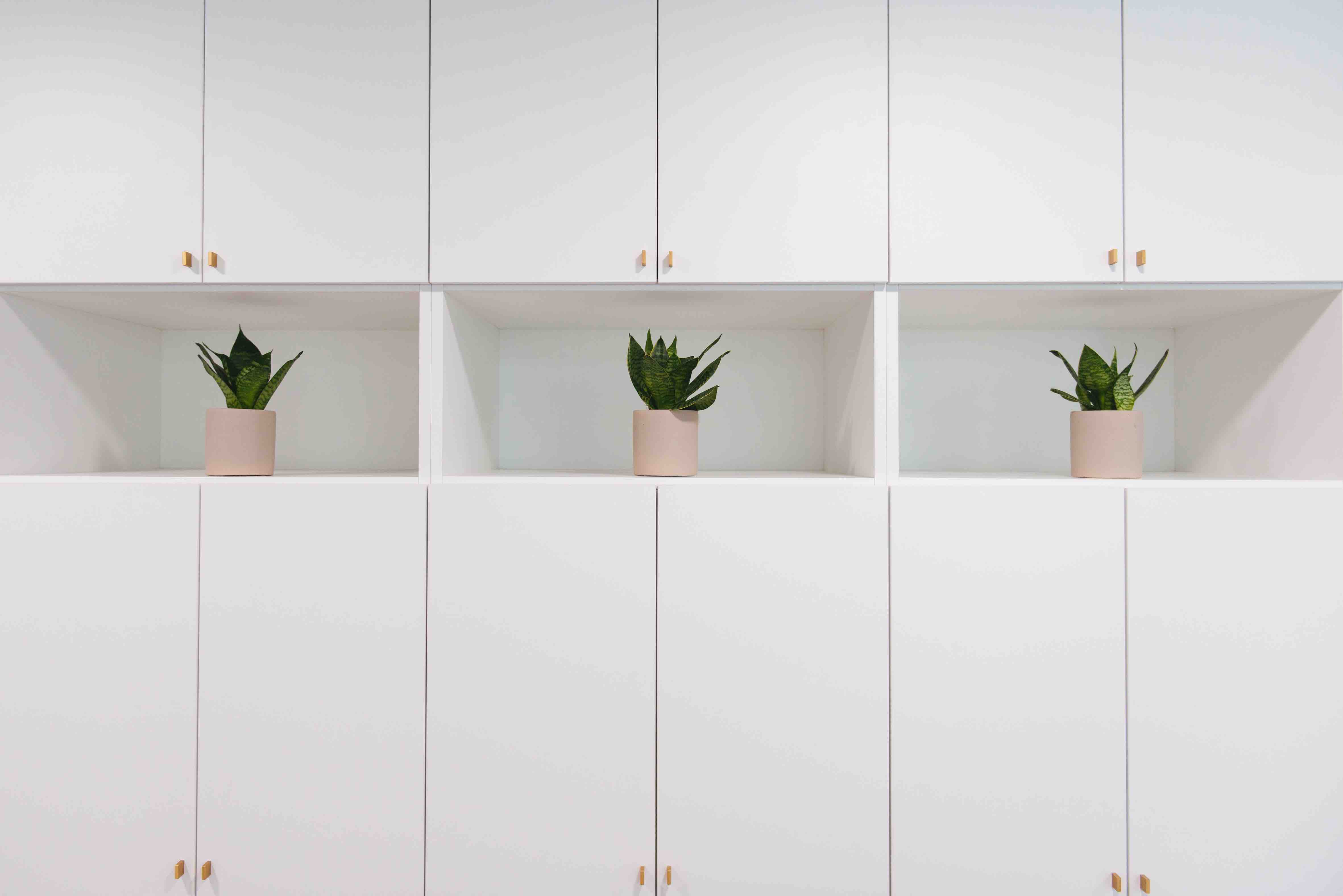végétalisation bureaux sweet jungle paris plantes intérieur