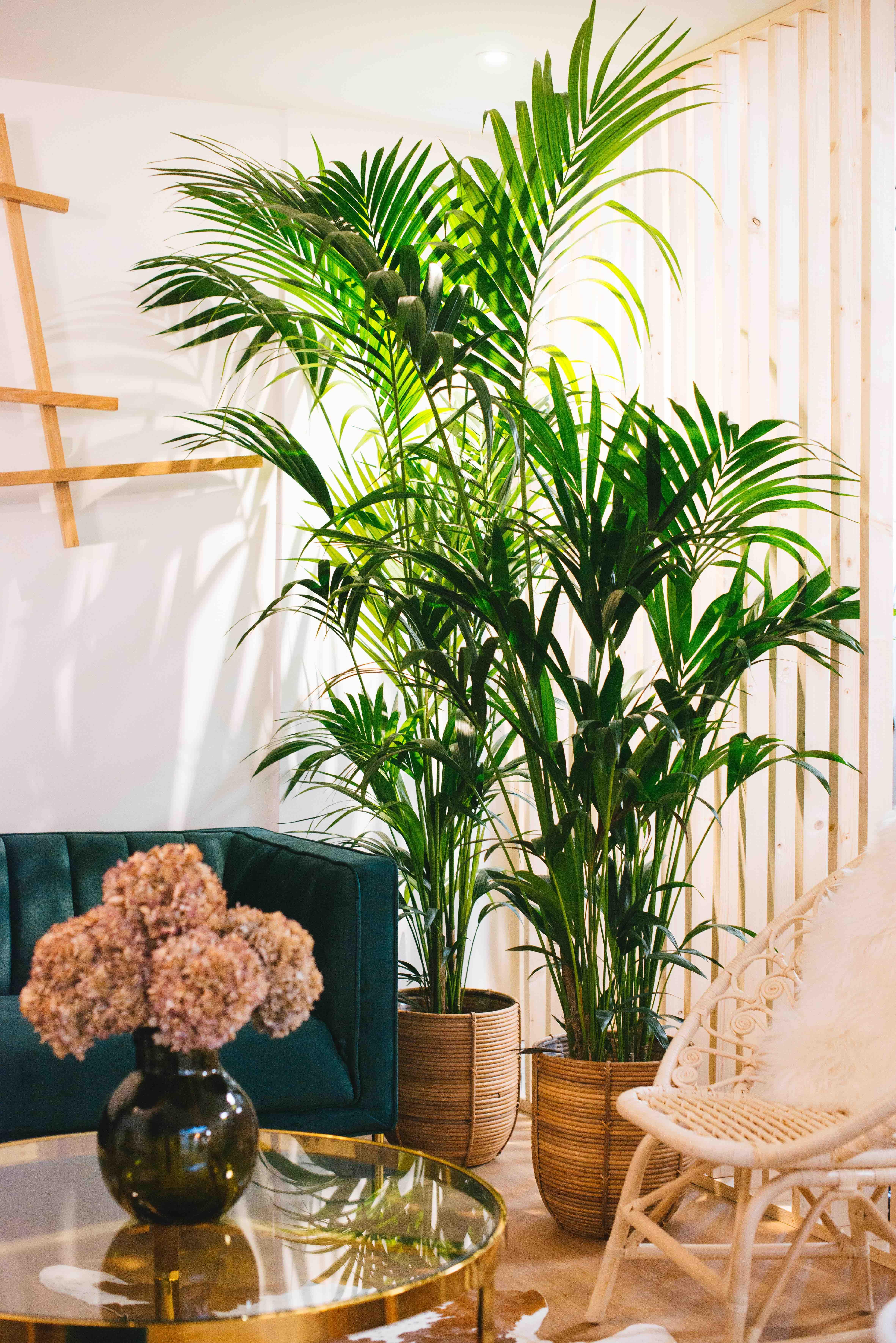 végétalisation bureau paris plantes palmiers