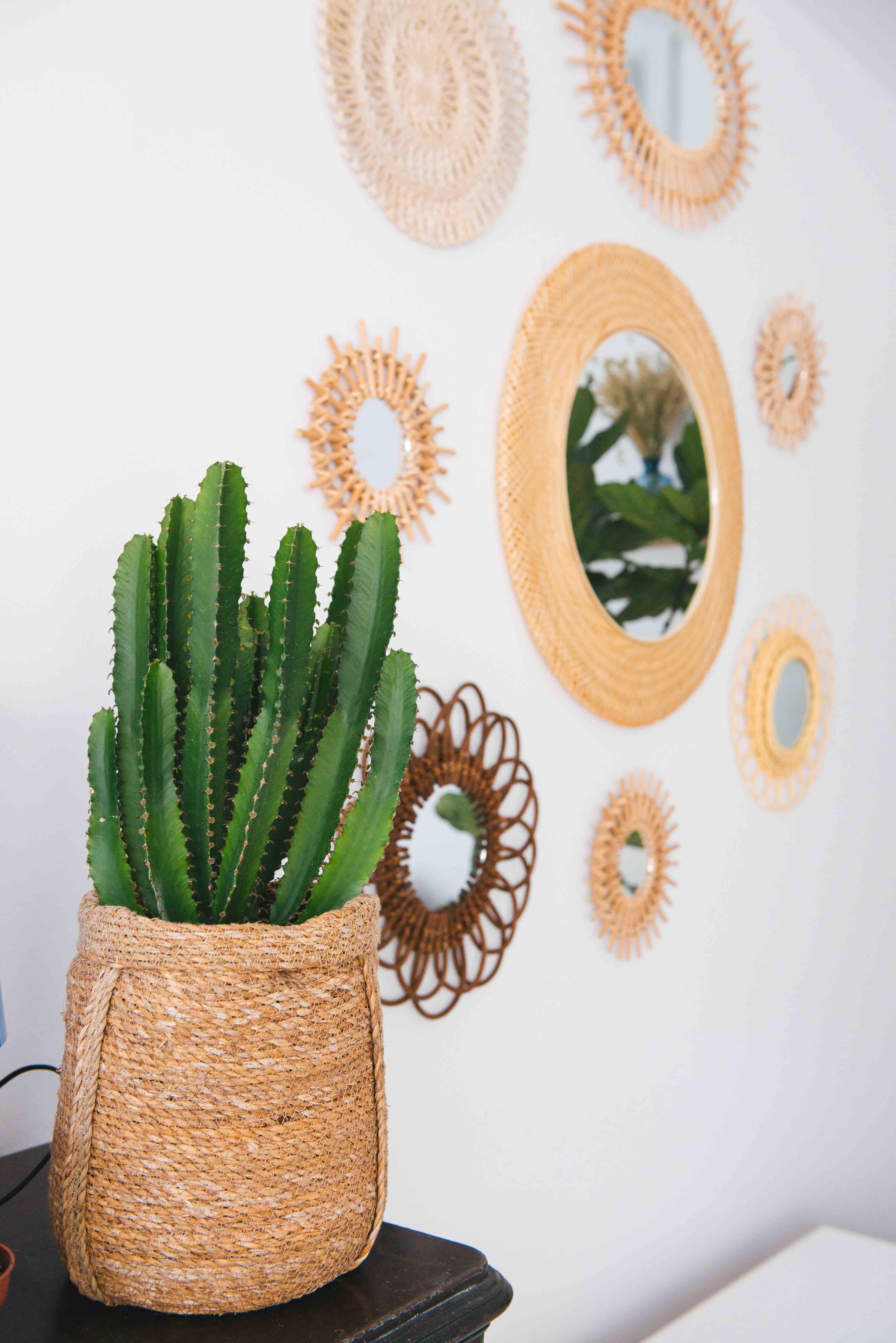 cactus decoration vegetale paris