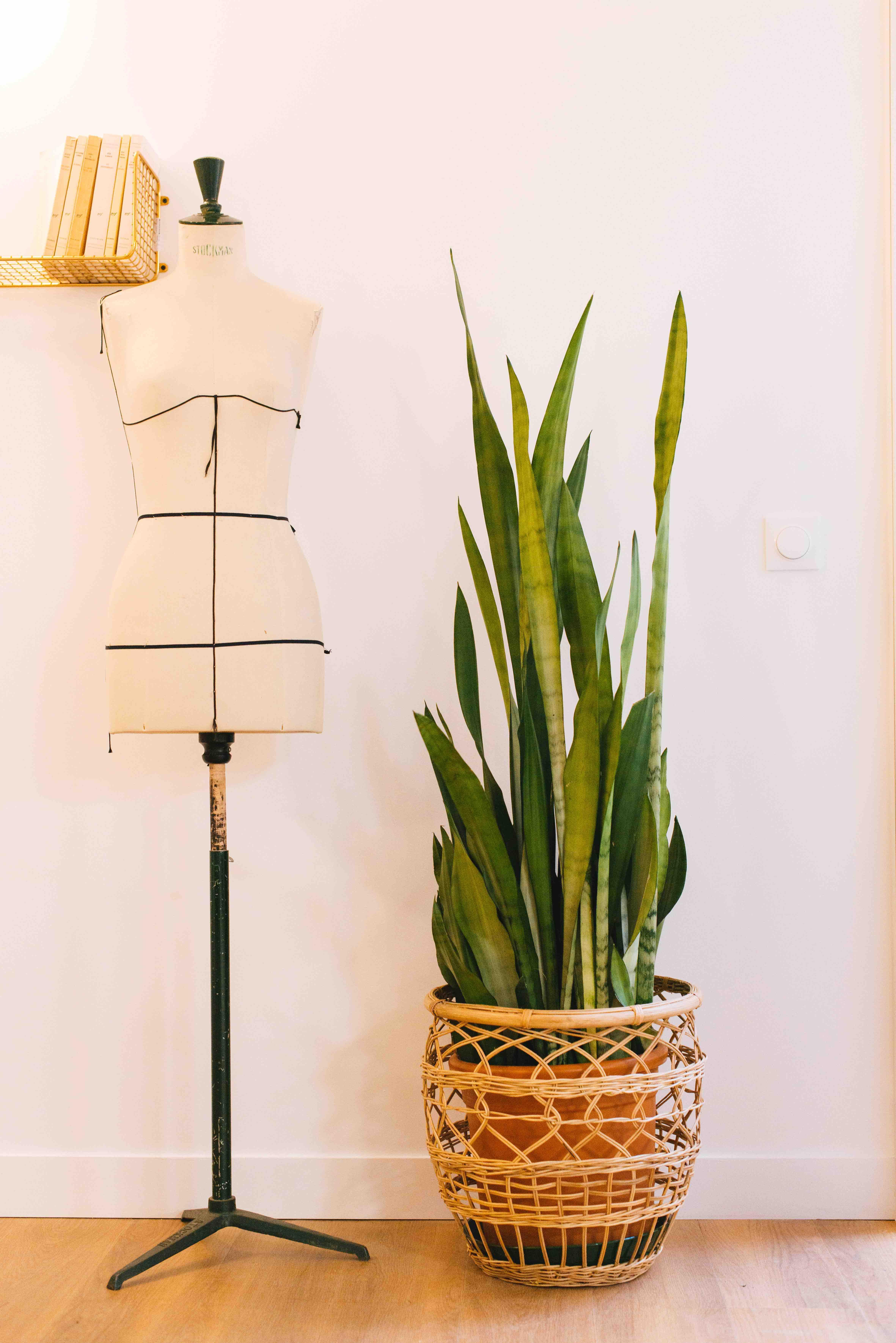 végétalisation bureau paris plantes décoration
