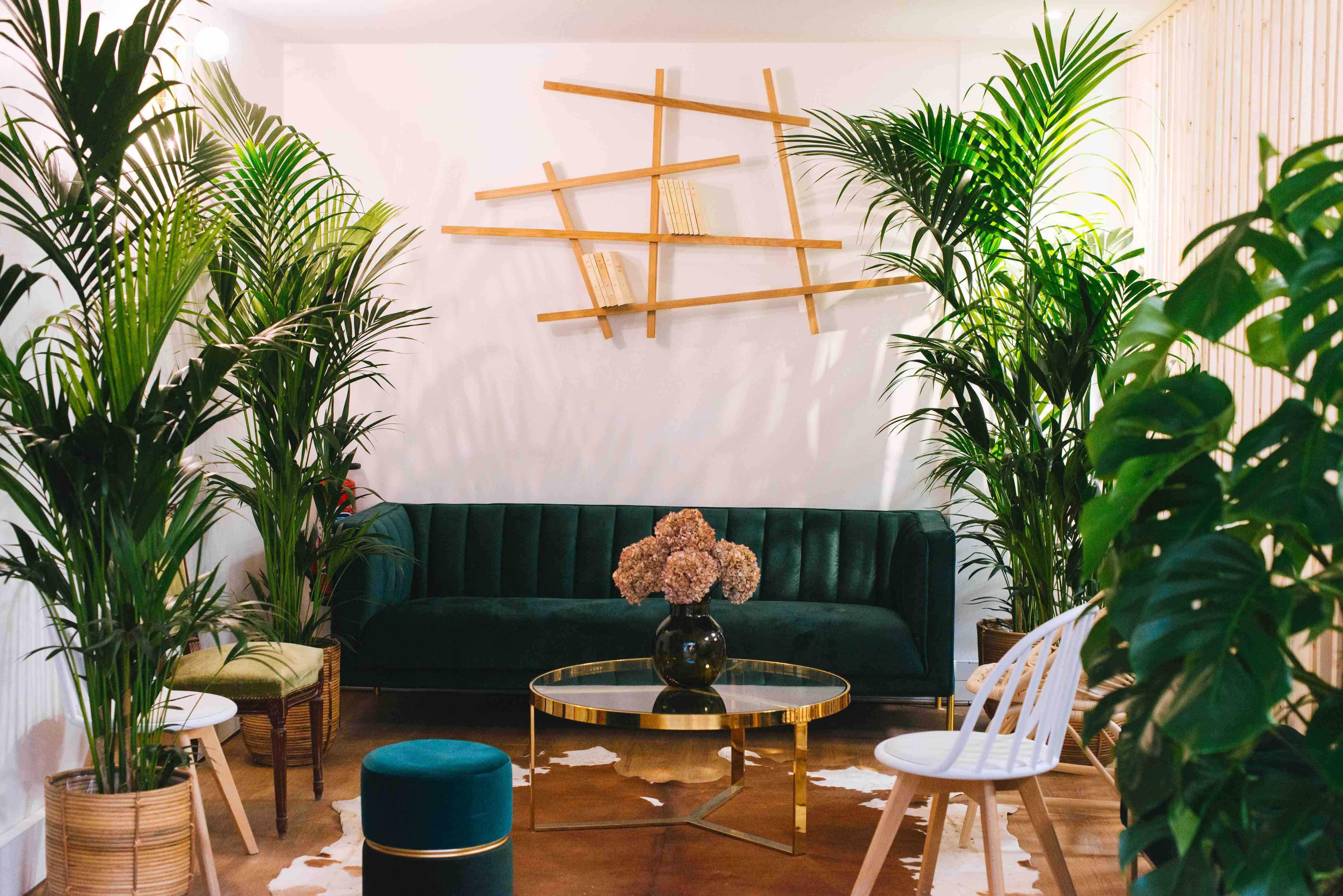 végétalisation bureau paris plantes jungle