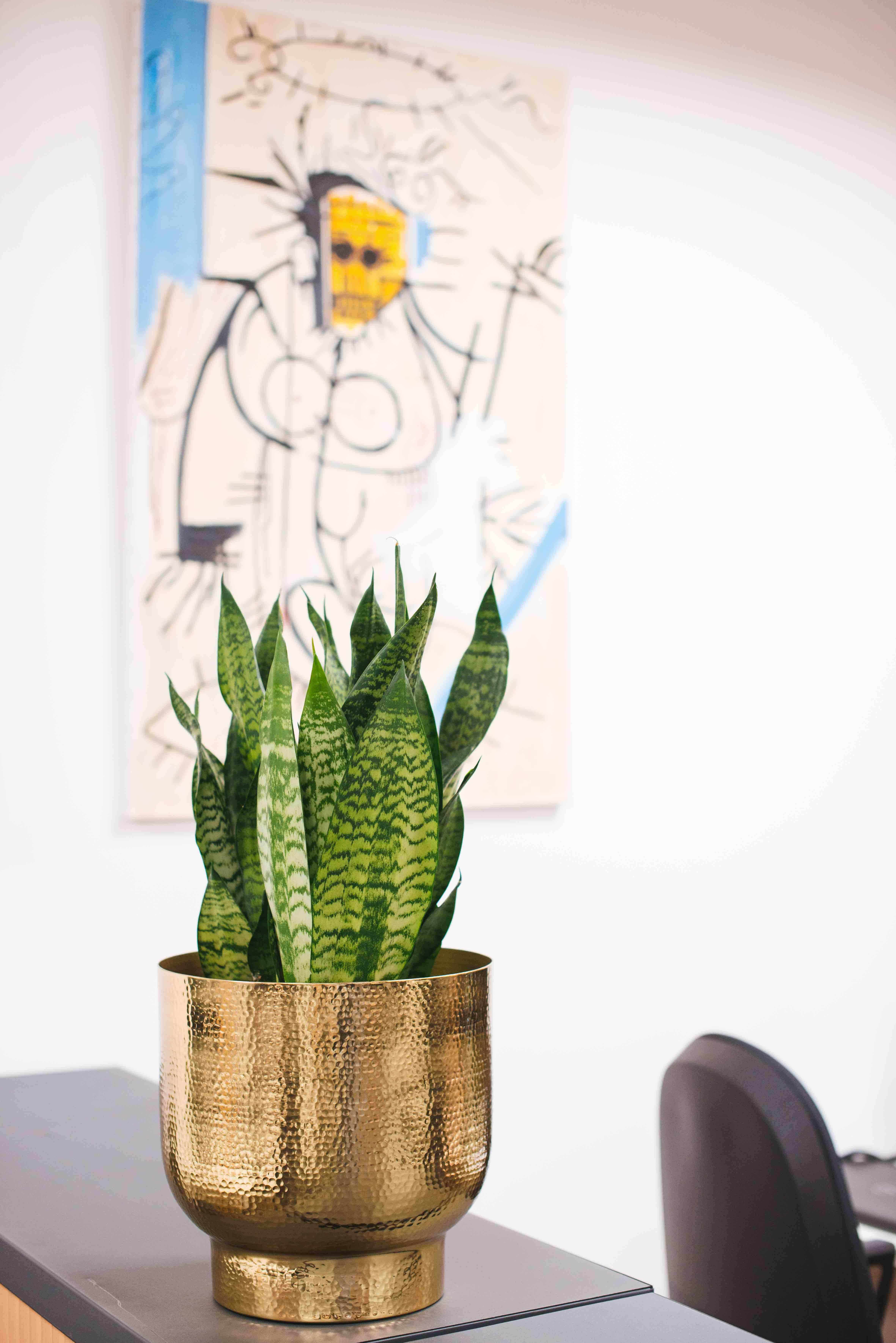 décoration plante bureau végétalisation paris