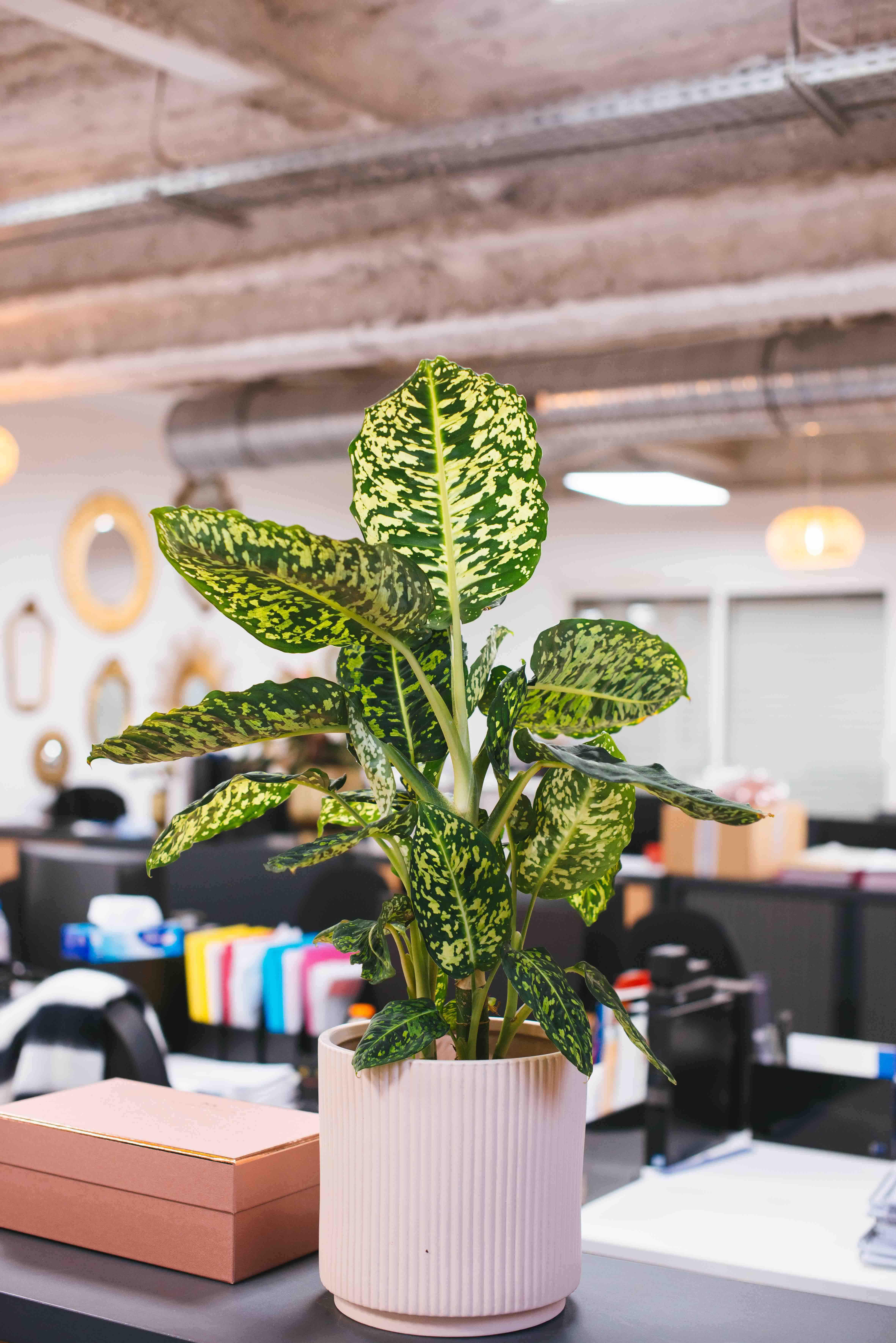 plante originale vegetalisation bureau paris