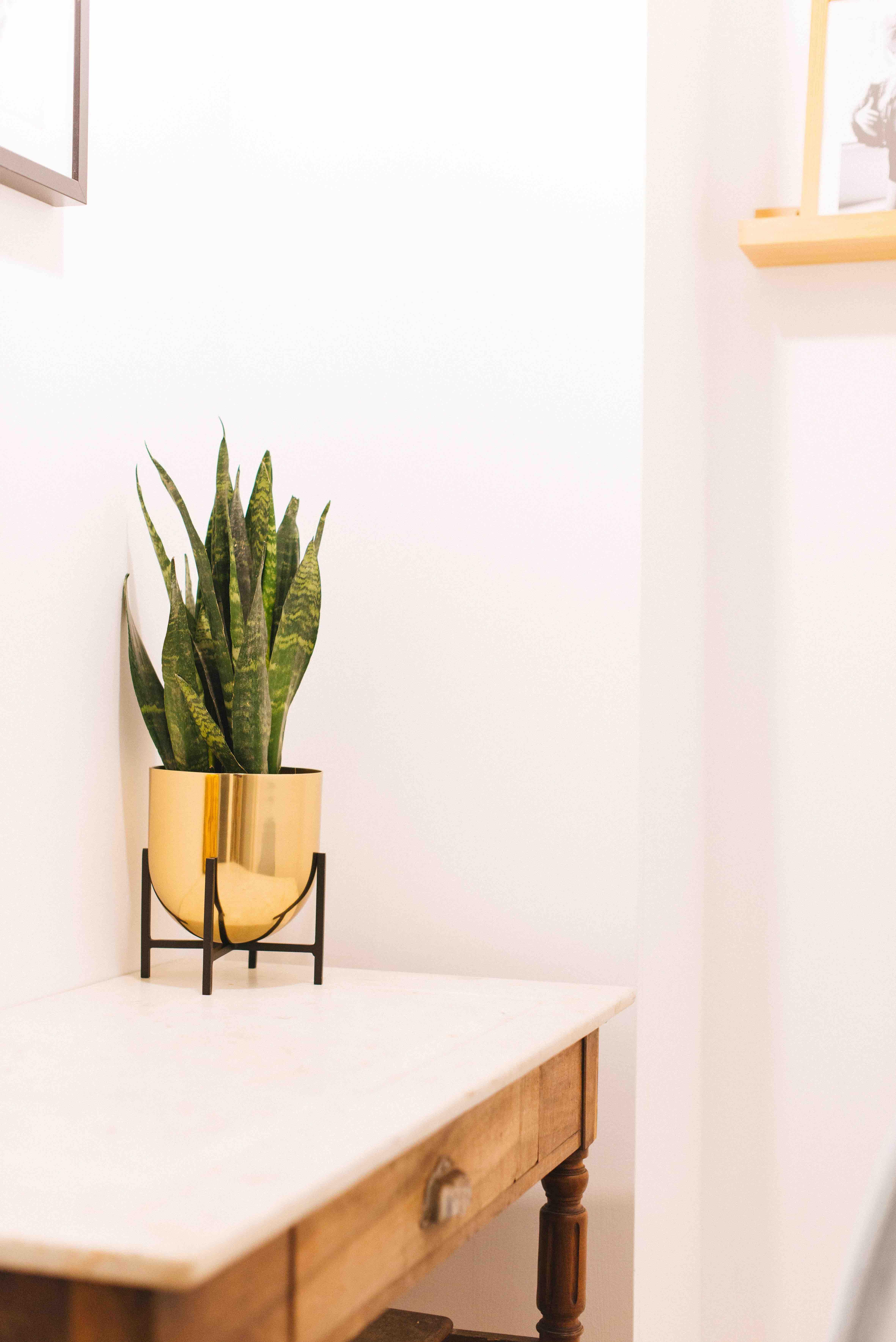 végétalisation bureau paris plantes