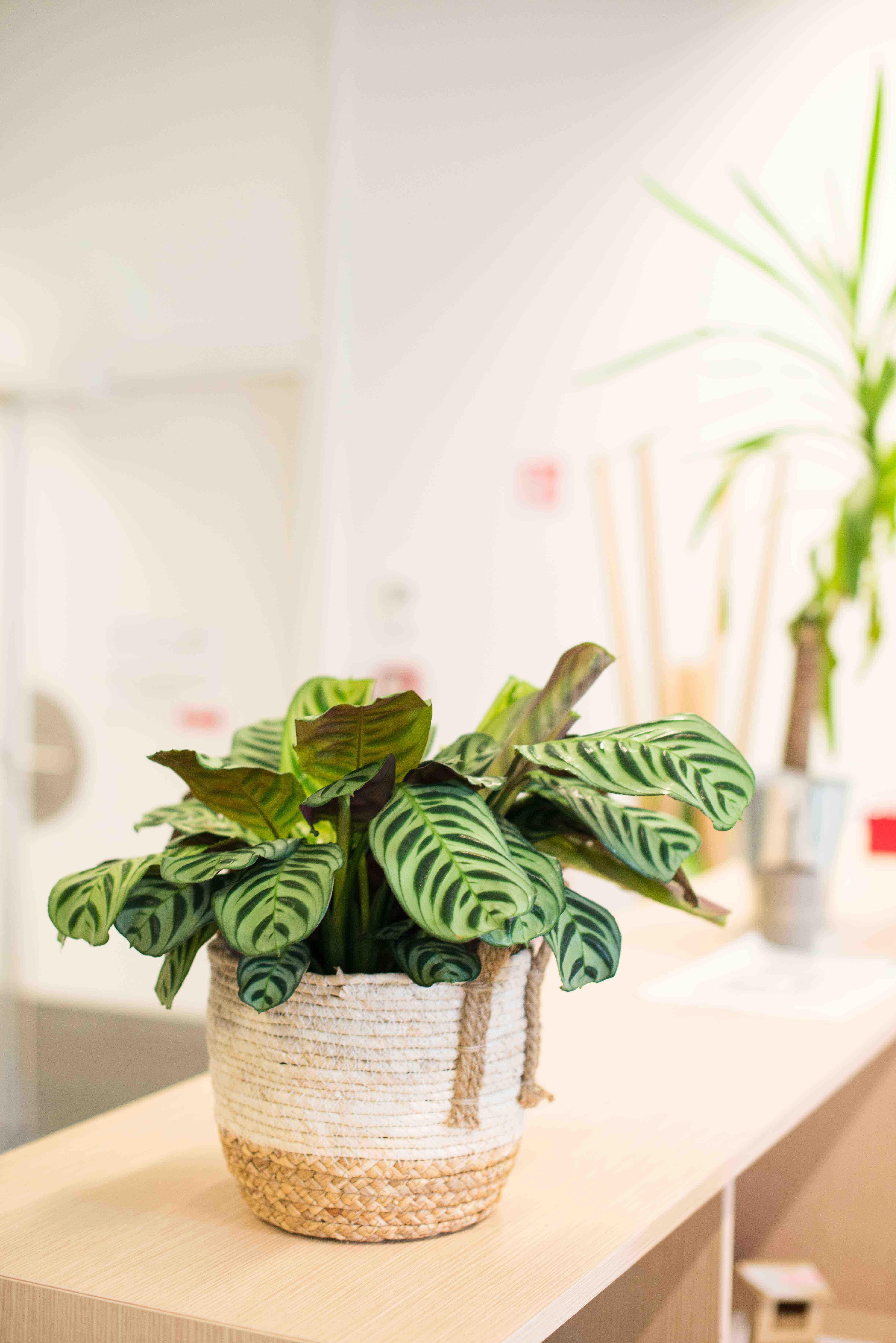 végétalisation bureau commerce paris sweet jungle plantes vertes