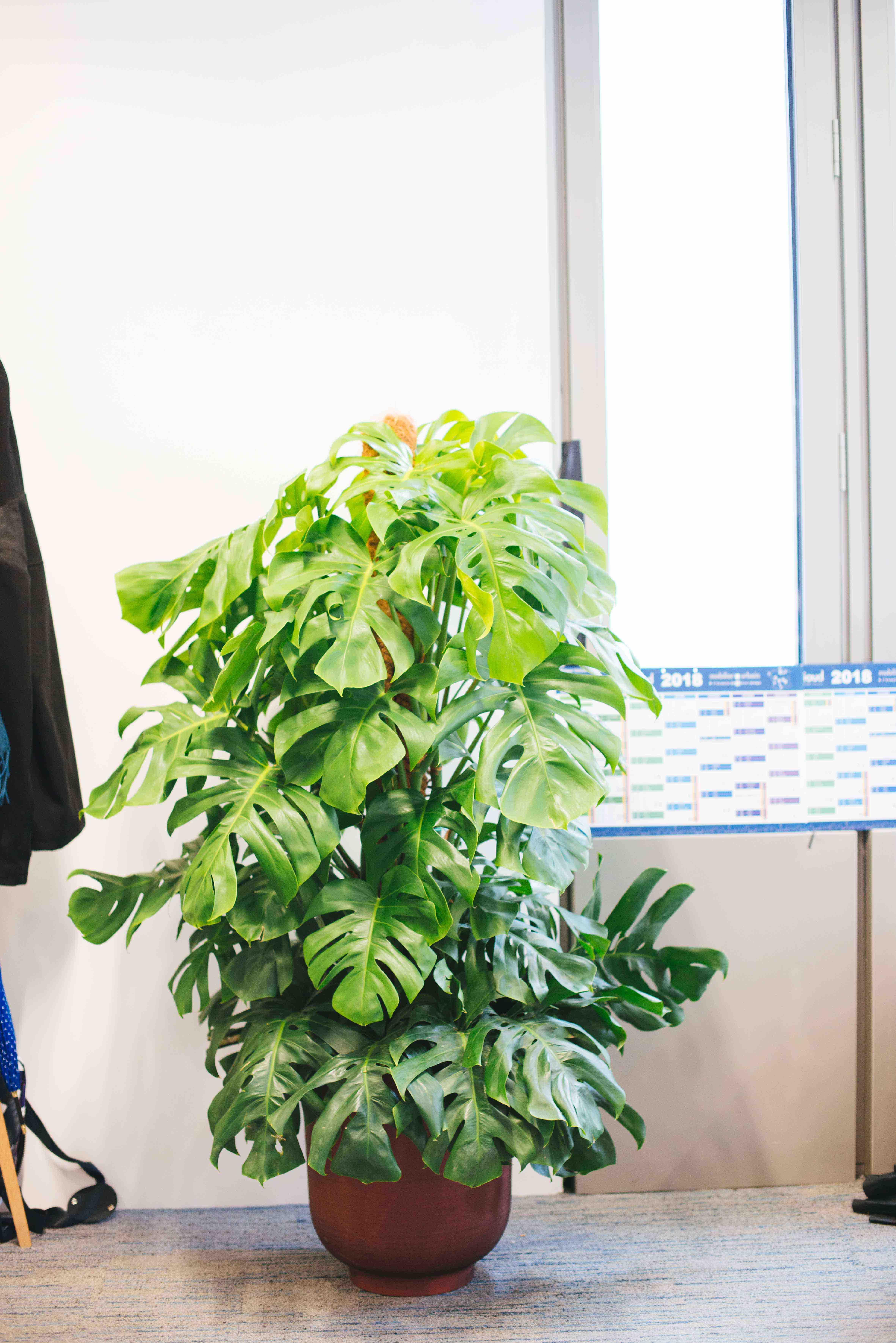 végétalisation bureau commerce paris sweet jungle plantes vertes monstera