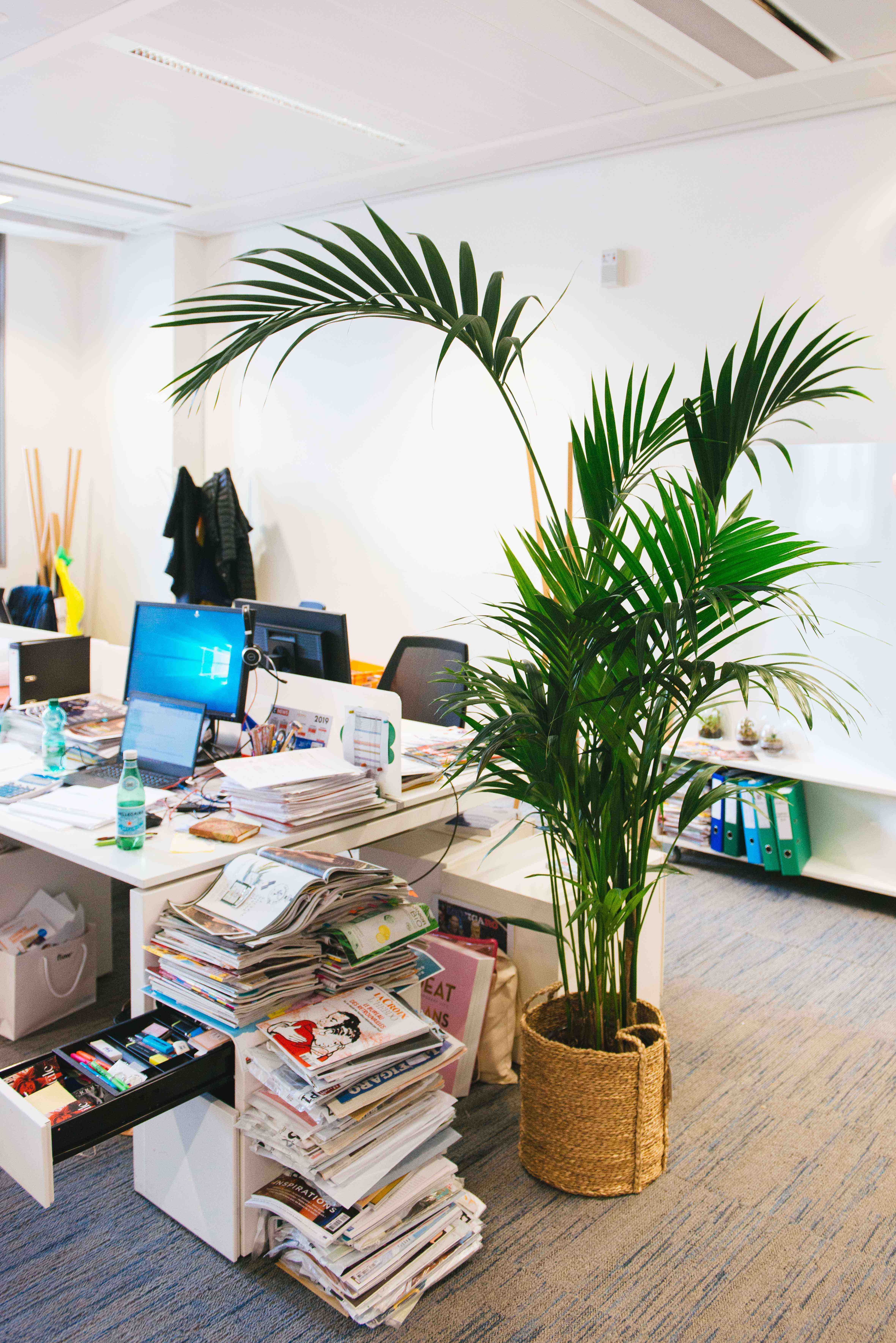 végétalisation bureau commerce paris sweet jungle palmier