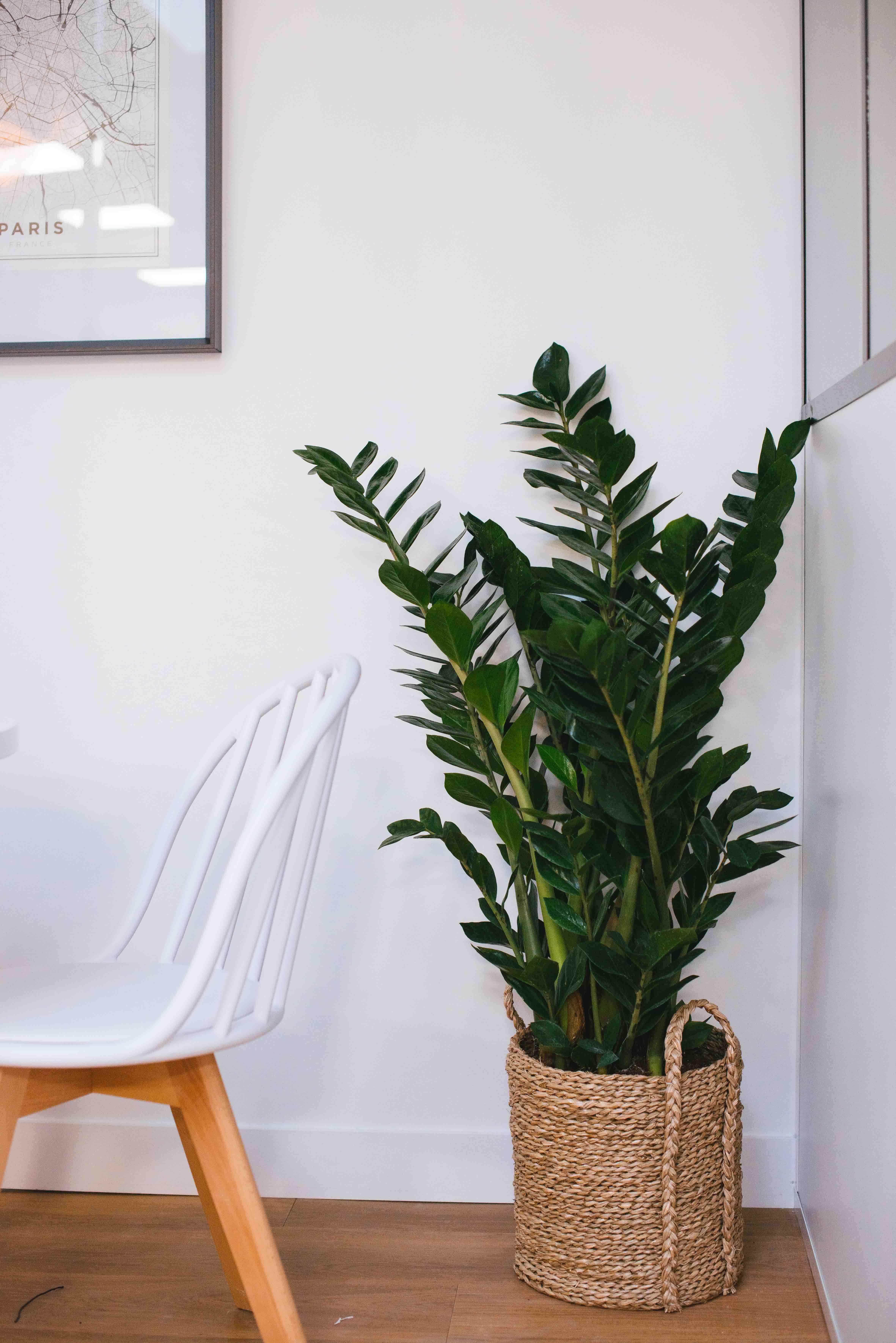 plante tropicale bureau végétalisation paris