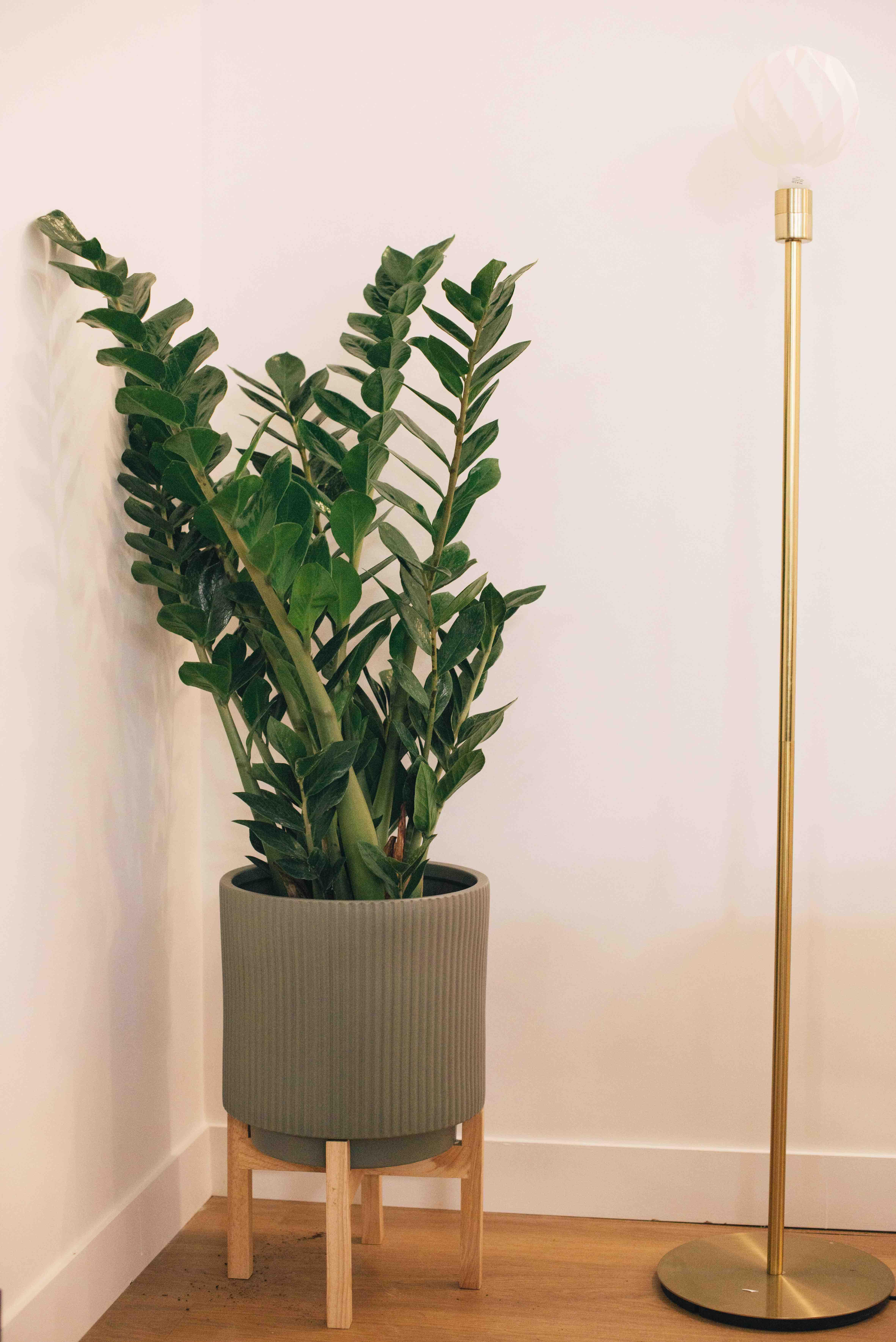 plante bureau sombre végétalisation paris