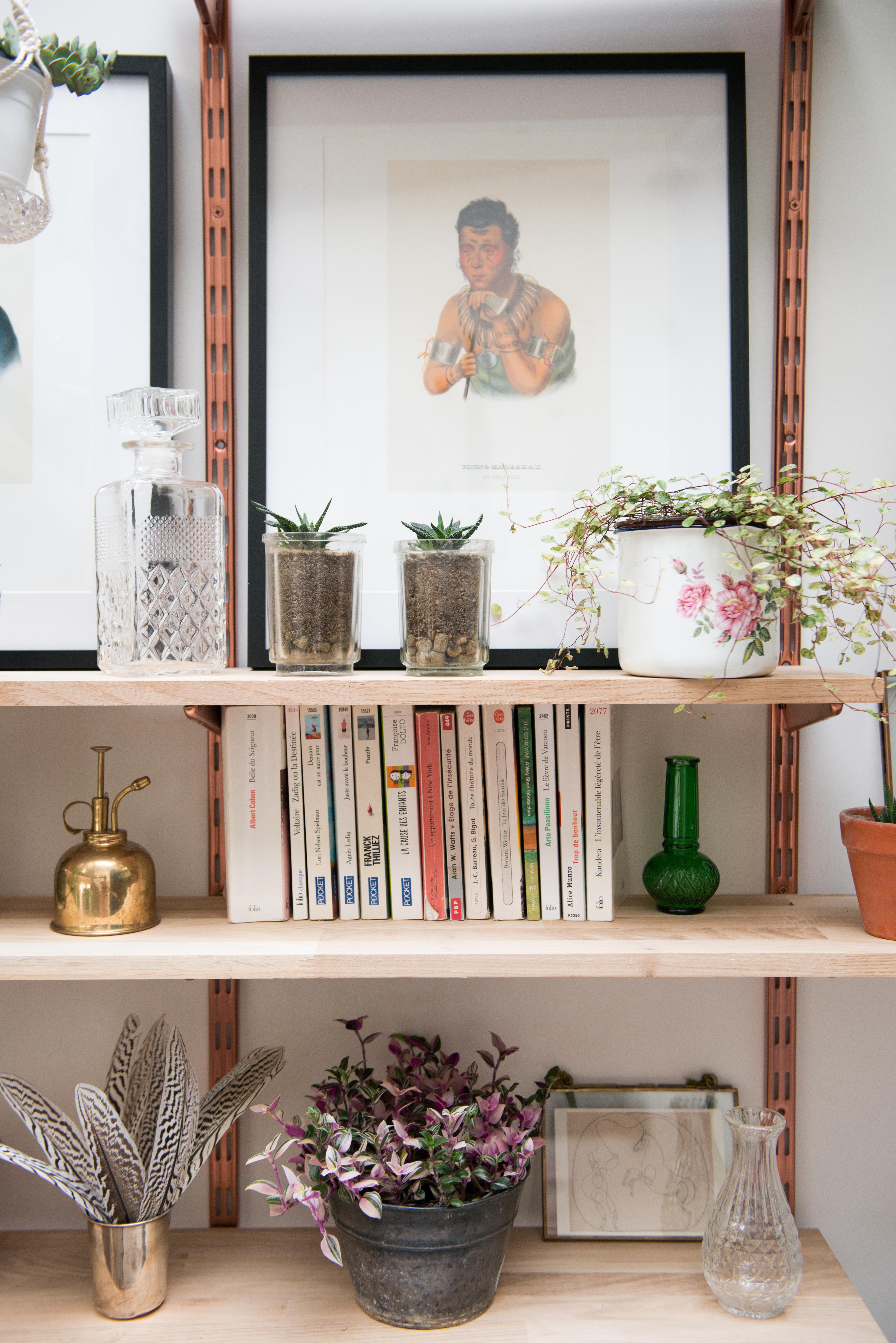 décoration végétale cactus tradescantia pots vintage étagère murale végétalisation