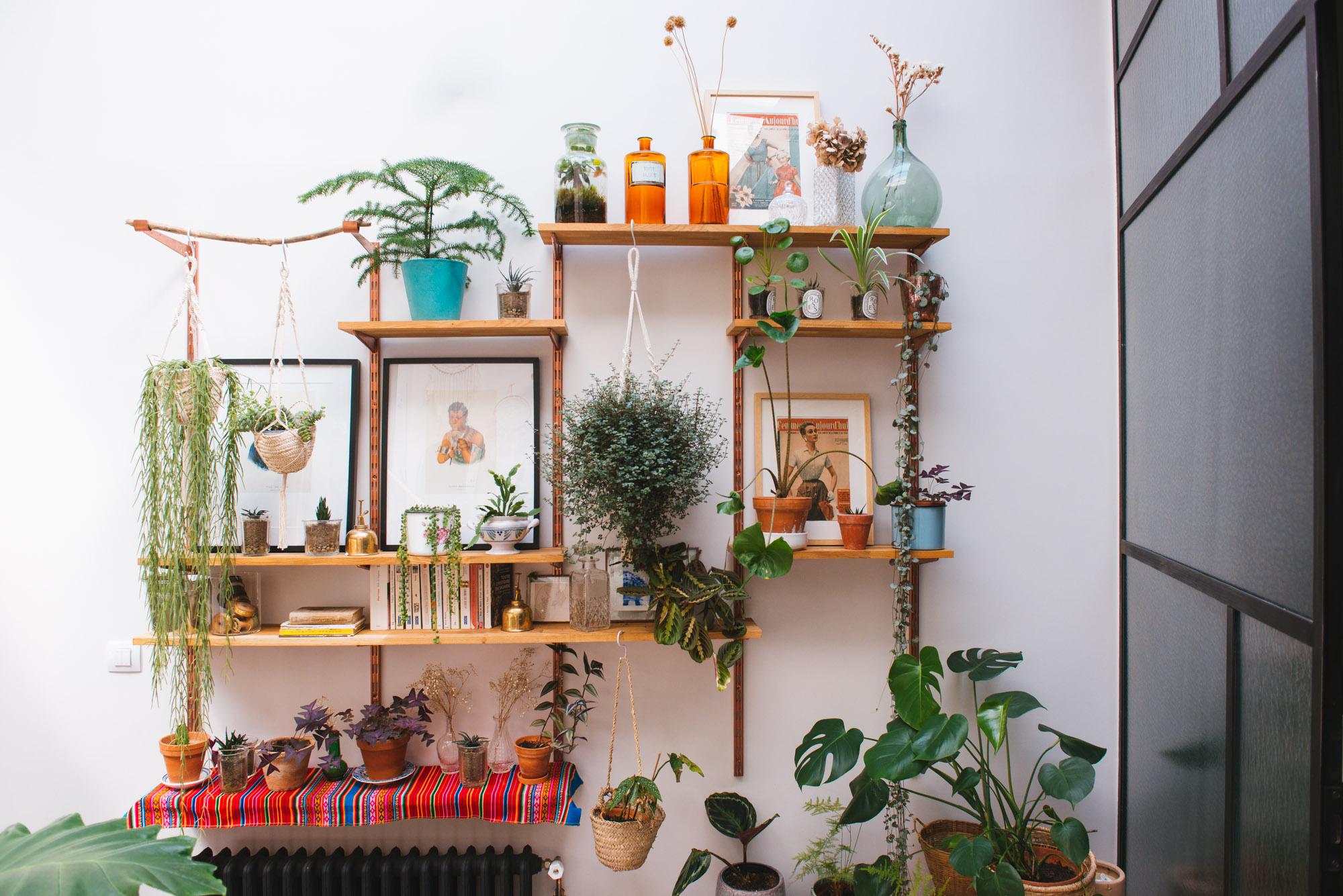 Décoration végétale sur une étagère