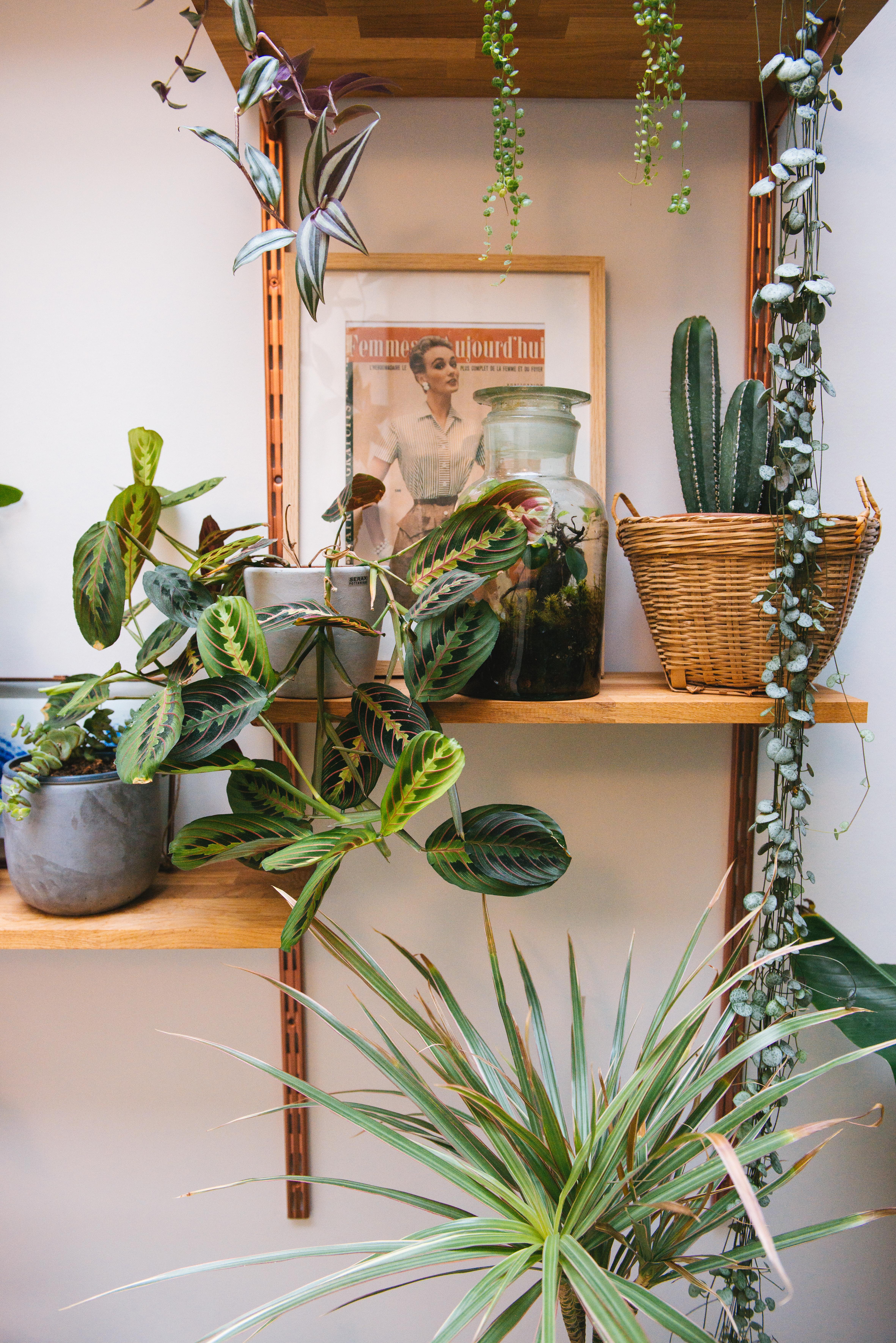 étagère végétale plantes végétalisation décoration