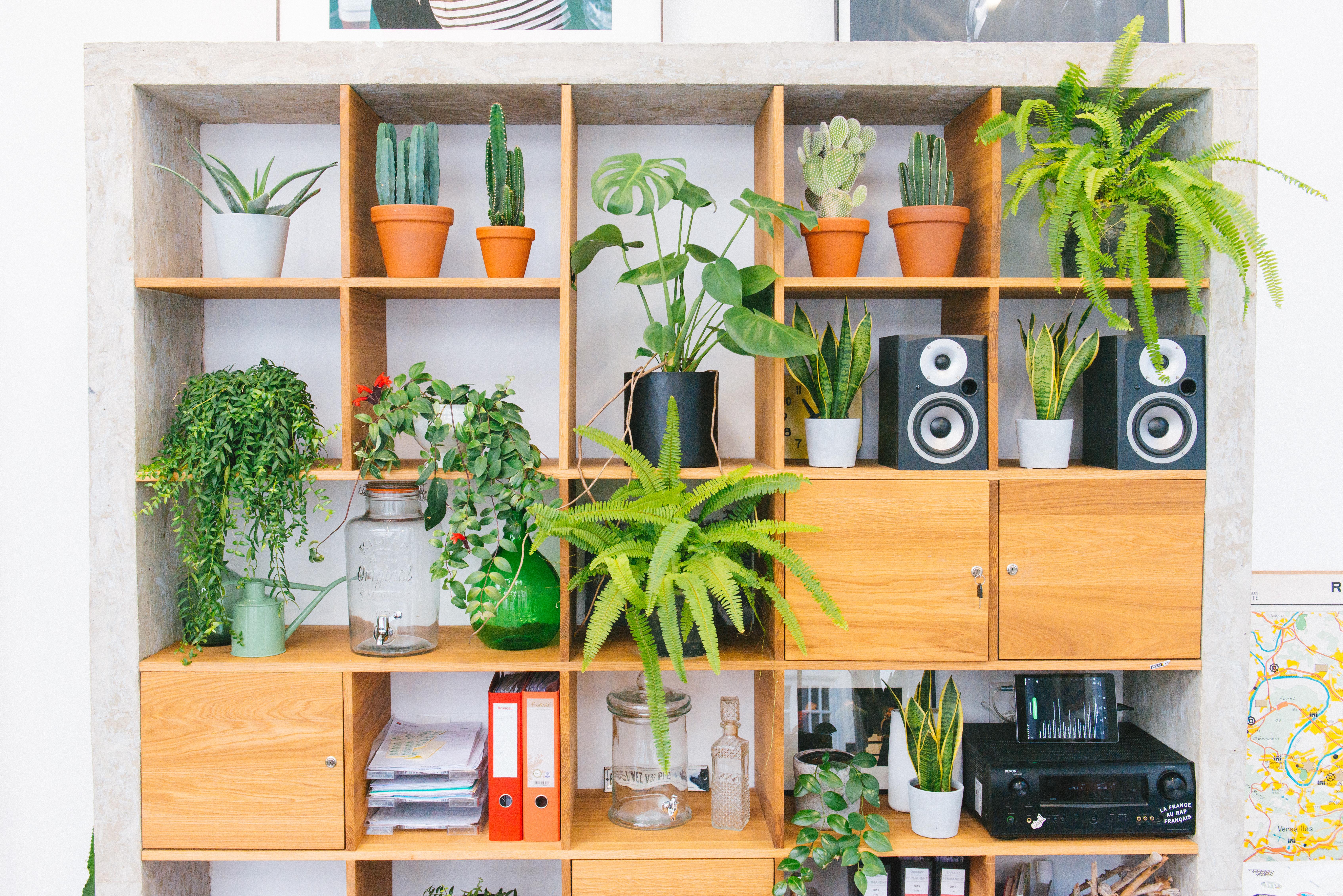 bibliothèque bureau décoration végétale végétalisation