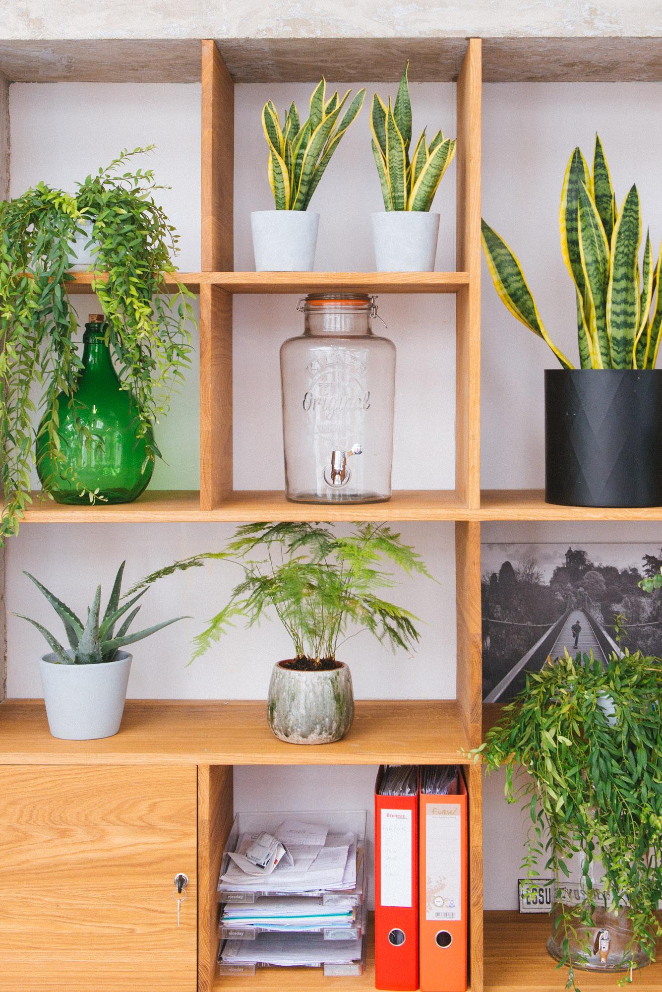 étagère dame jeanne aloe vera sansevieria végétalisation bureaux décoration végétale d'intérieur