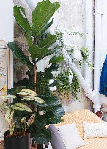 Plantes prêtes-à-poser