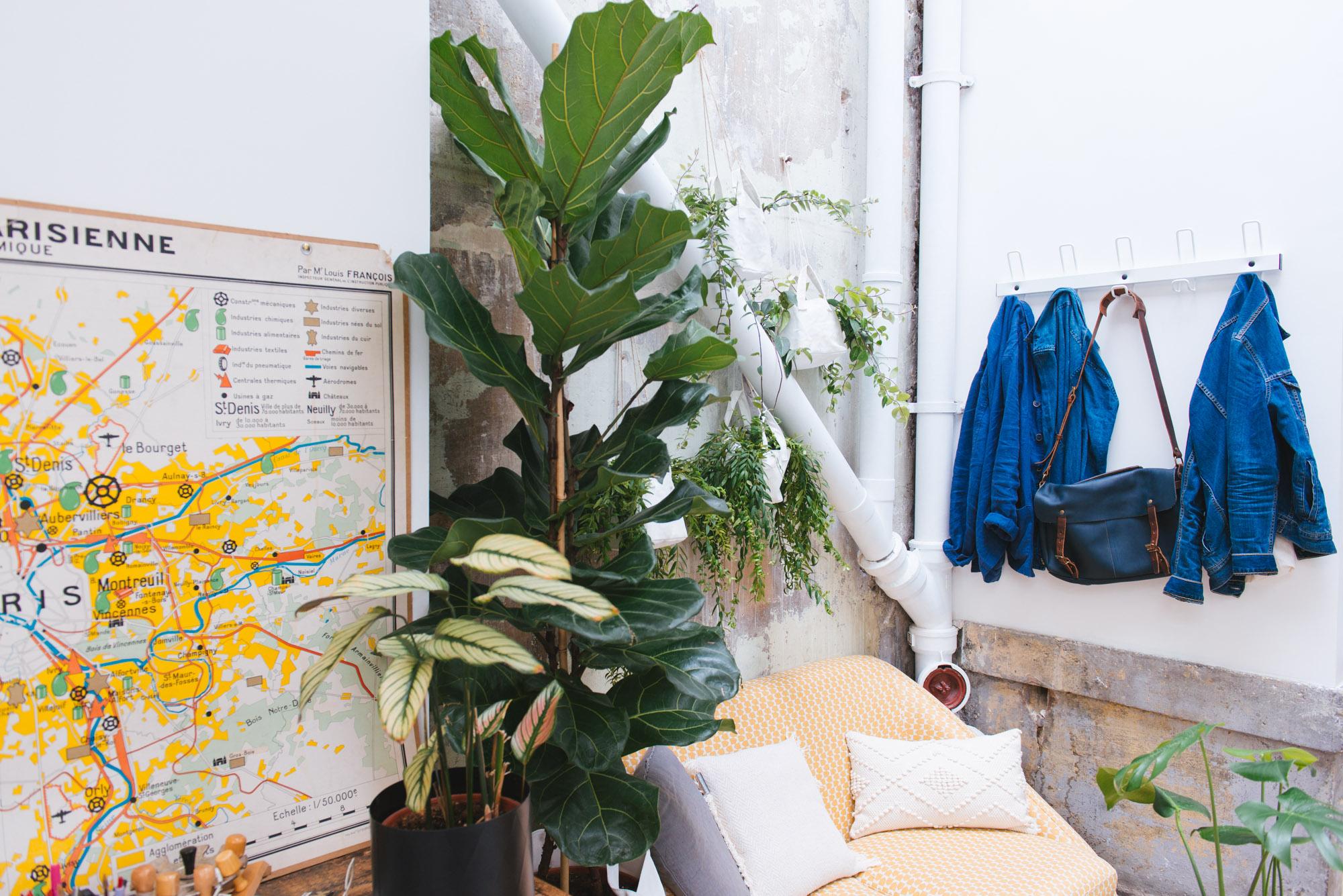 ficus lyrata bureau décoration végétale végétalisation