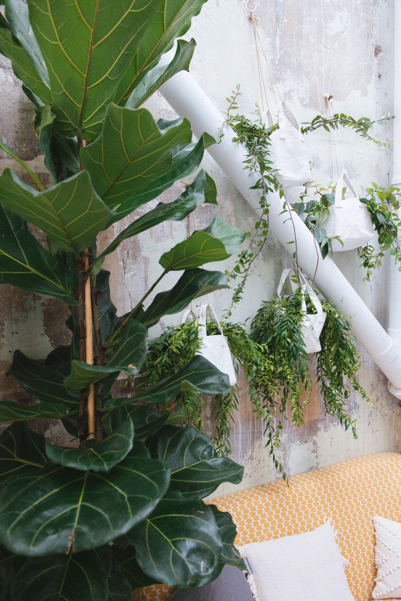 ficus lyrata plantes à suspendre bien être travail décoration végétale végétalisation