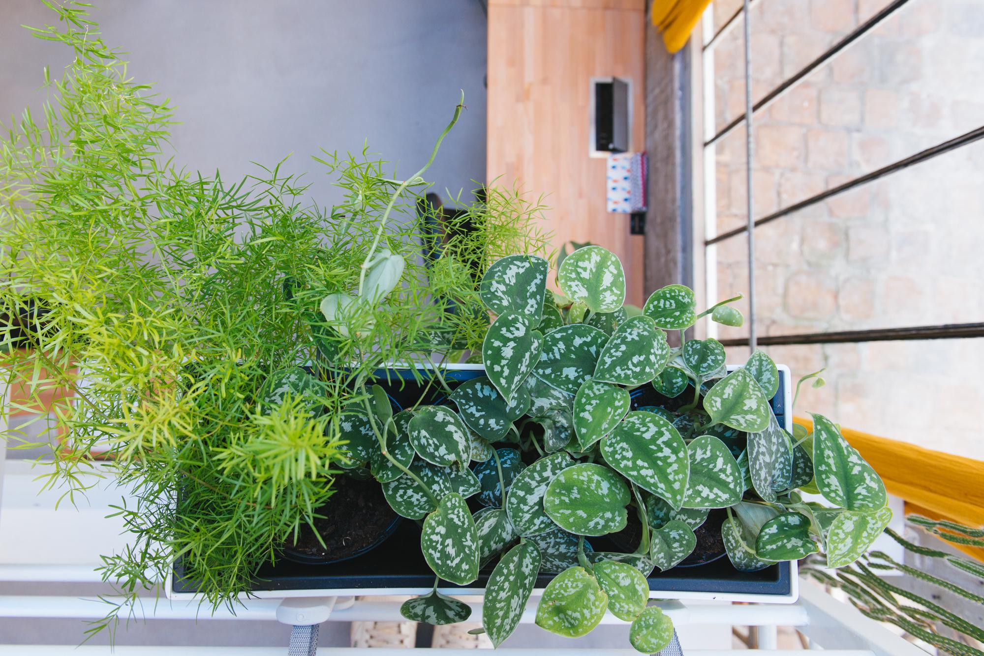 jardinières bureau végétalisation bureaux décoration végétale d'intérieur