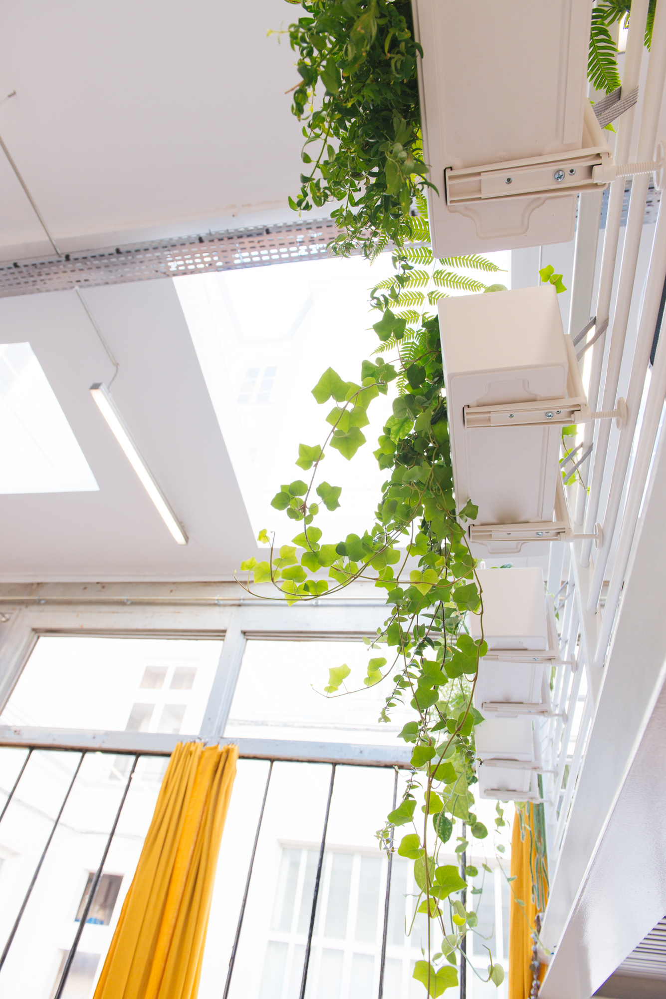 plantes à suspendre bureau jardinières végétalisation bureaux décoration végétale d'intérieur