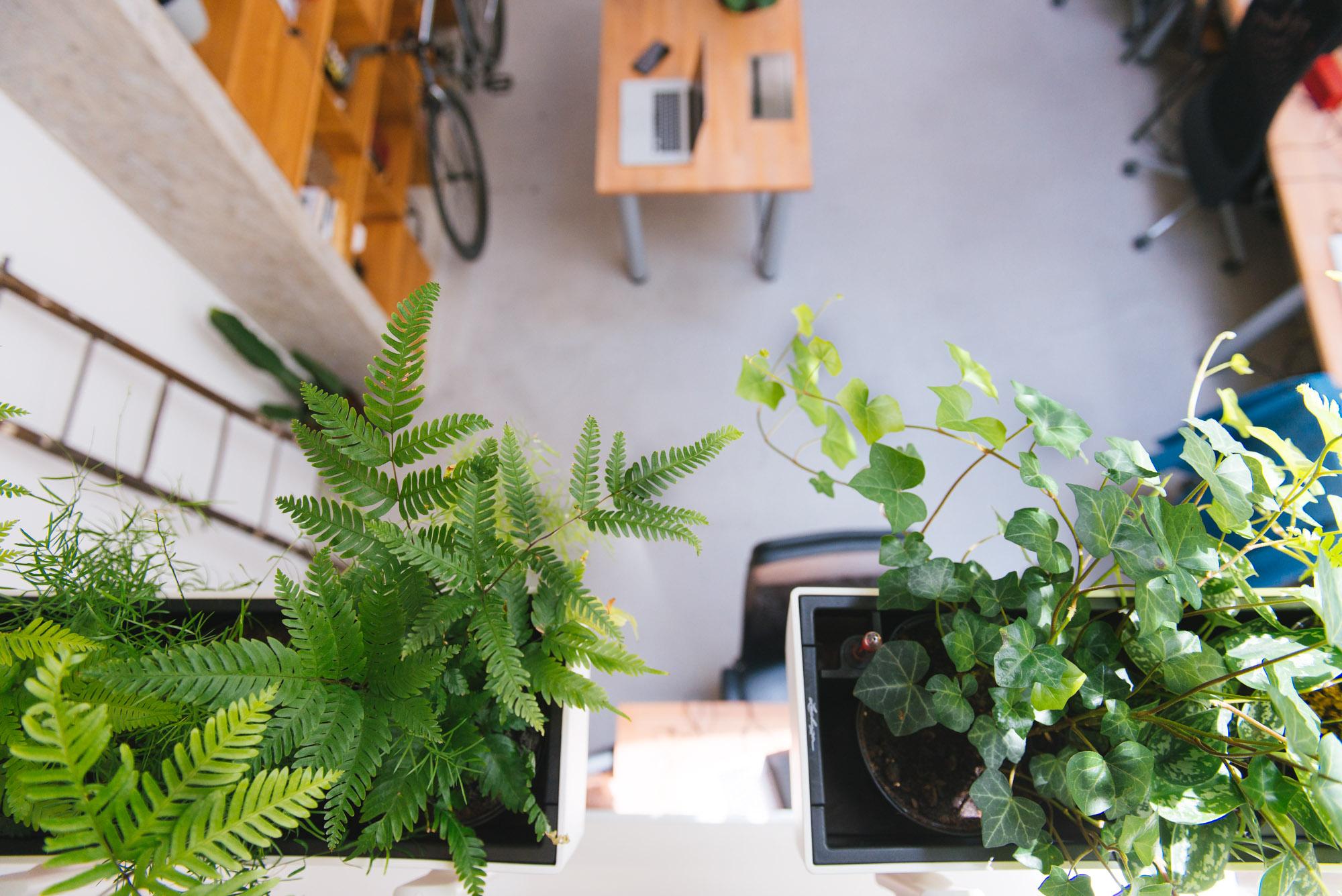 fougeres decoration végétale végétalisation