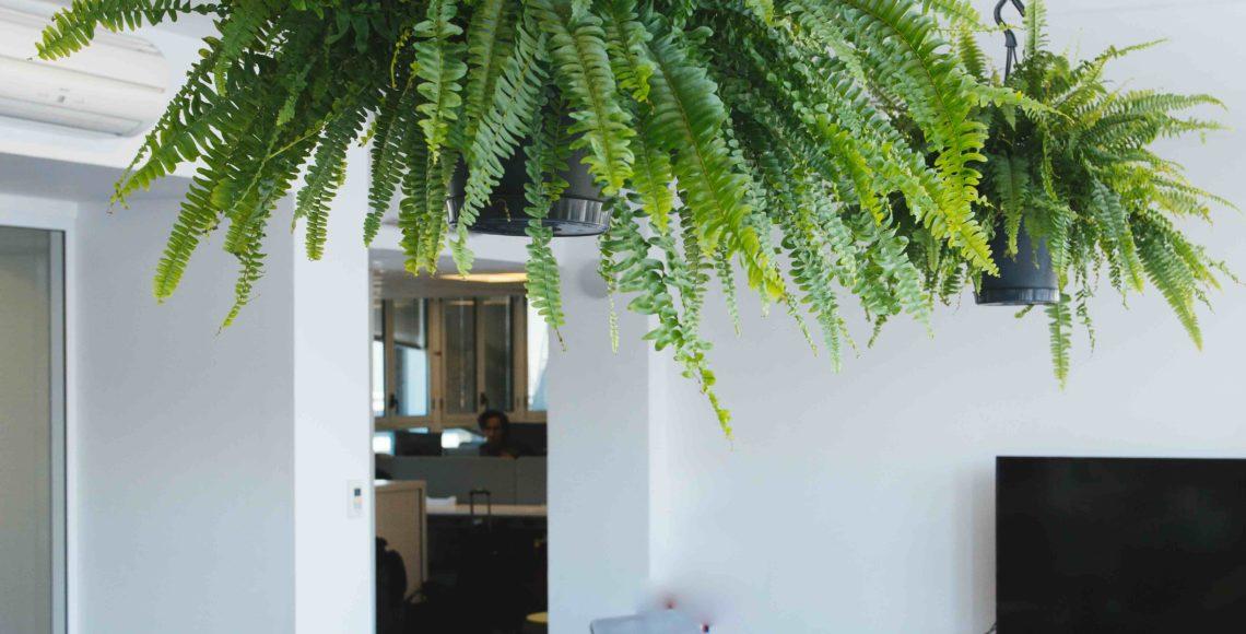 plantes vertes cuisine végétalisation