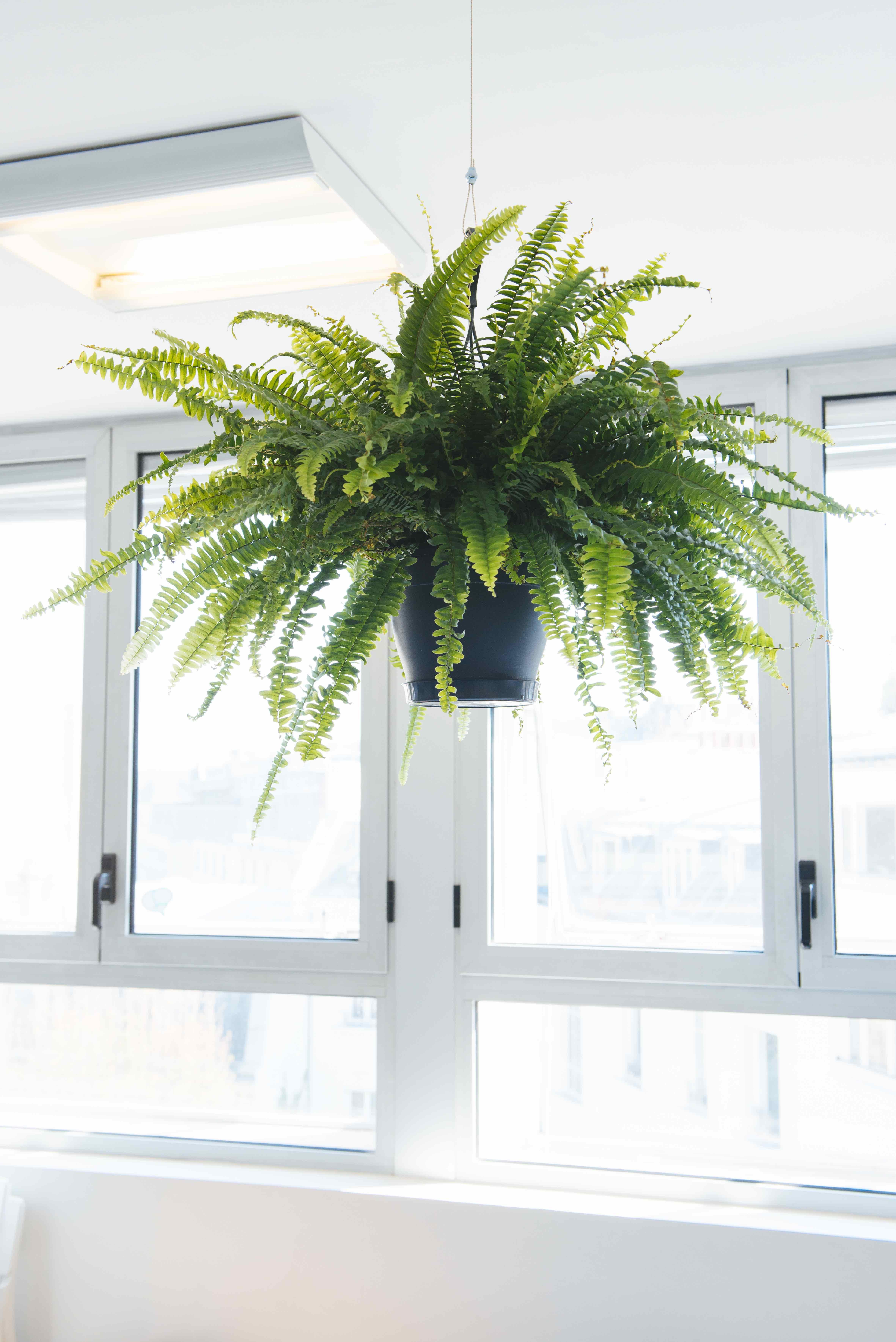 plantes vertes cuisine végétalisation bureaux