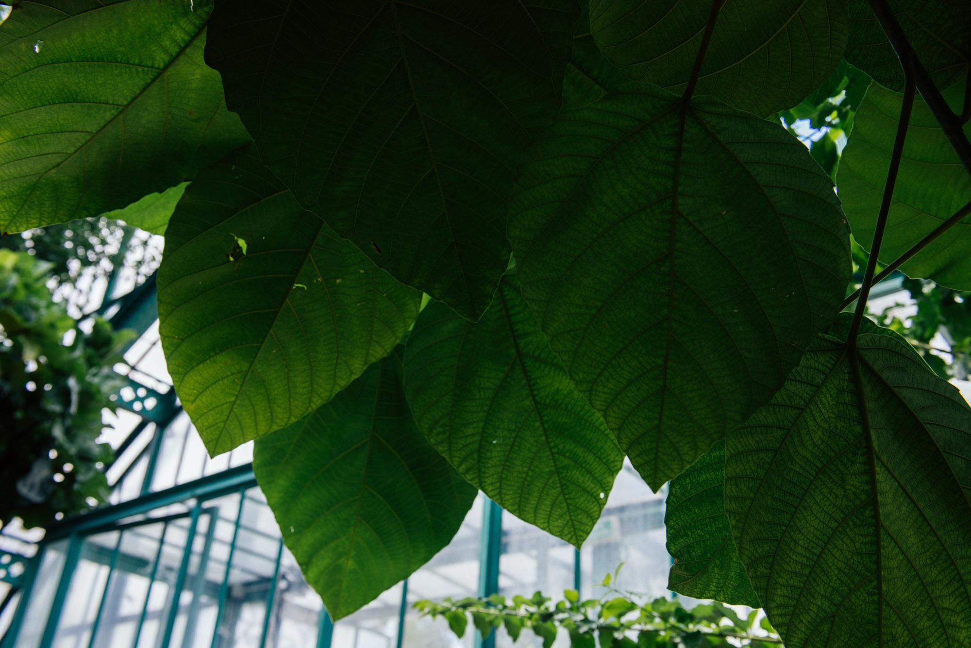 végétalisation paris plantes jungle