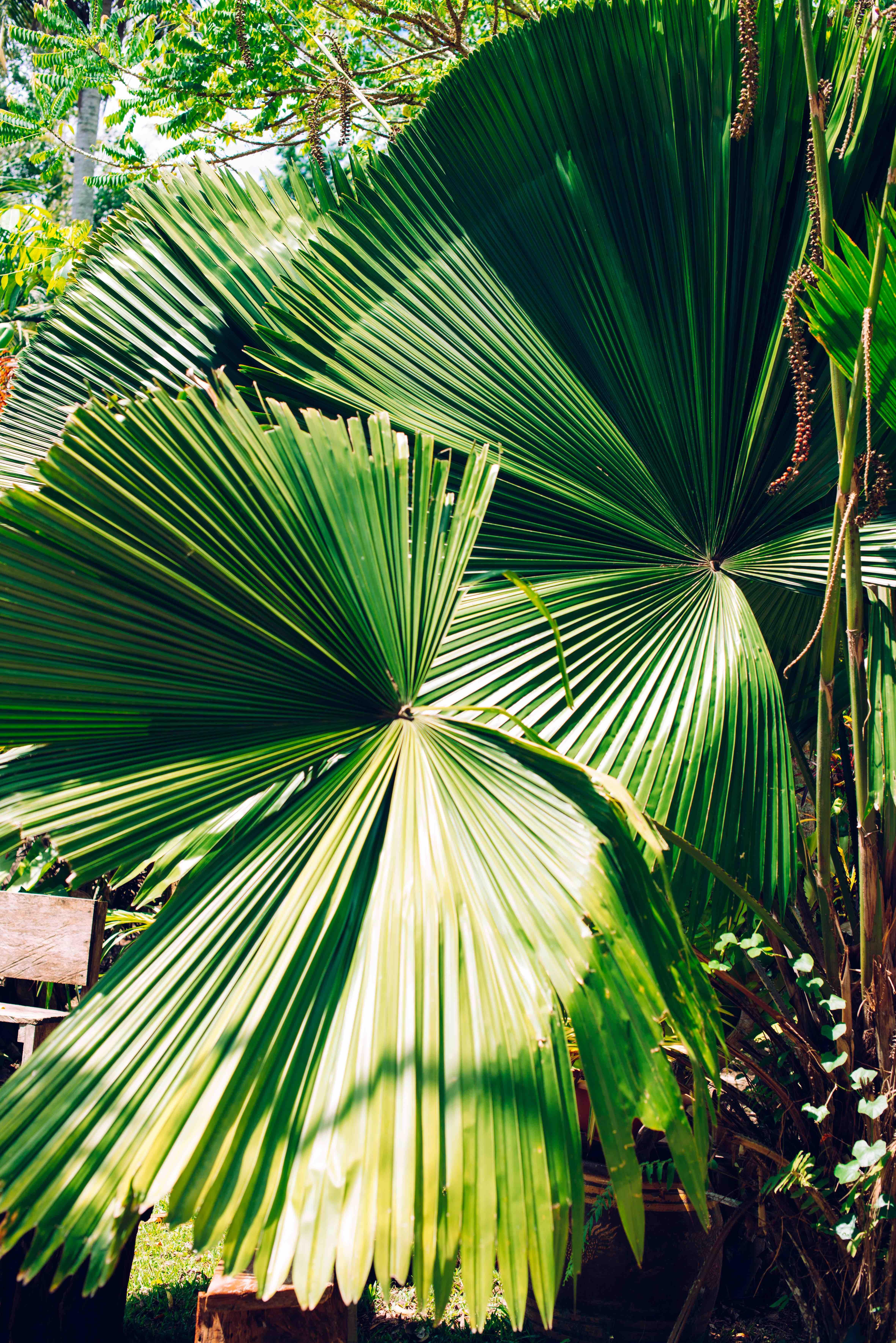 plantes tropicales jungle végétalisation paris