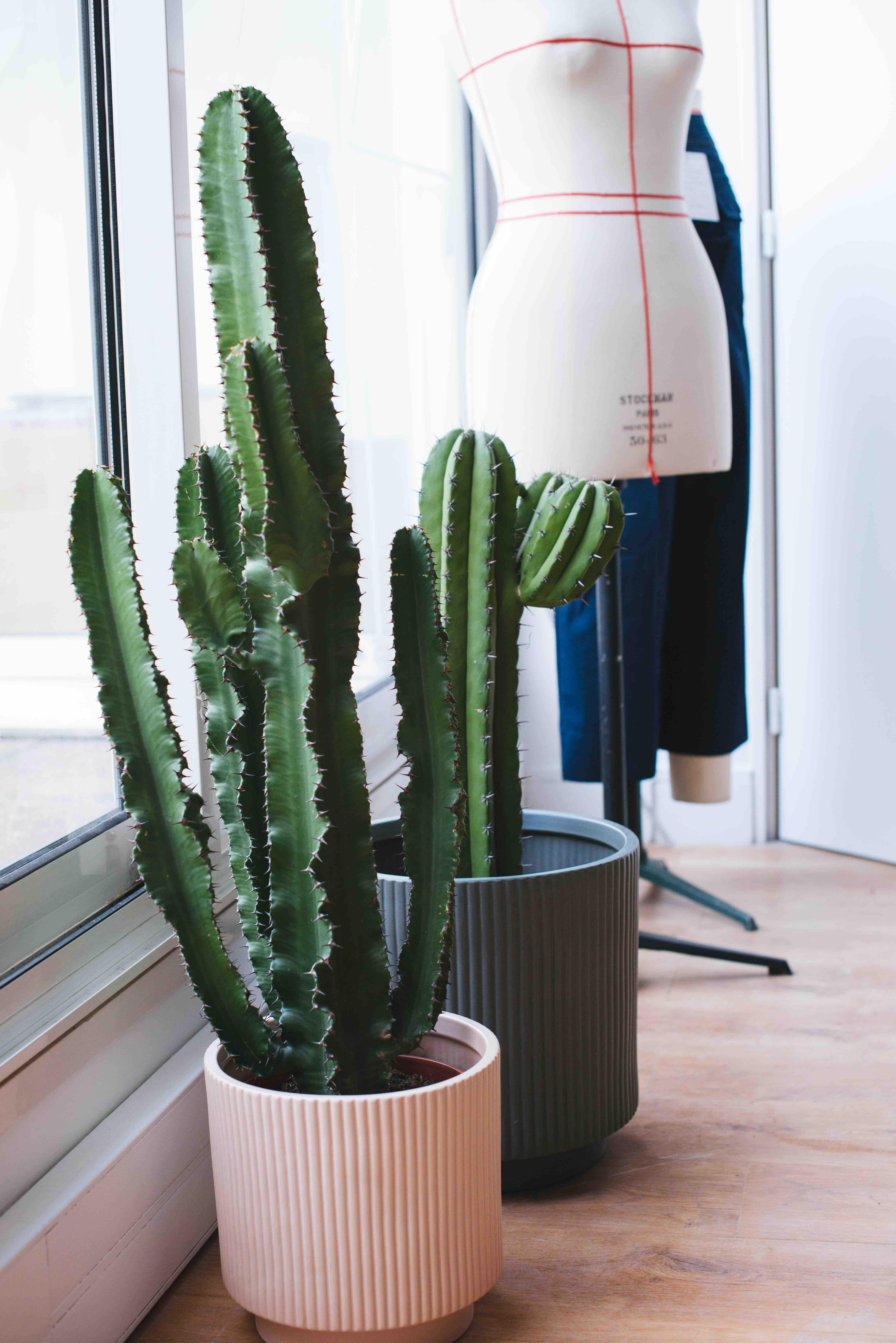 végétalisation bureau paris plantes cactus