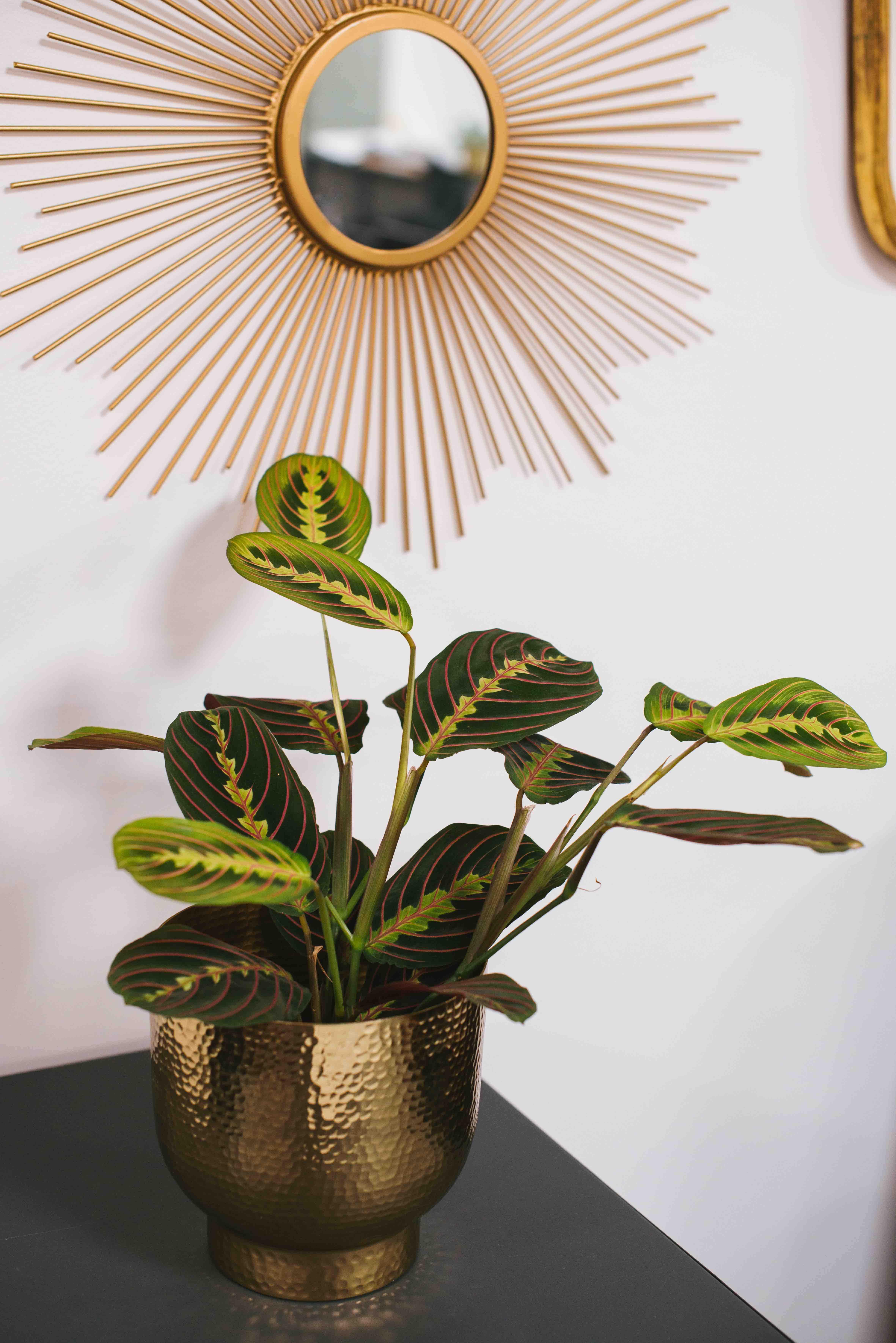 belle plante bureau végétalisation paris