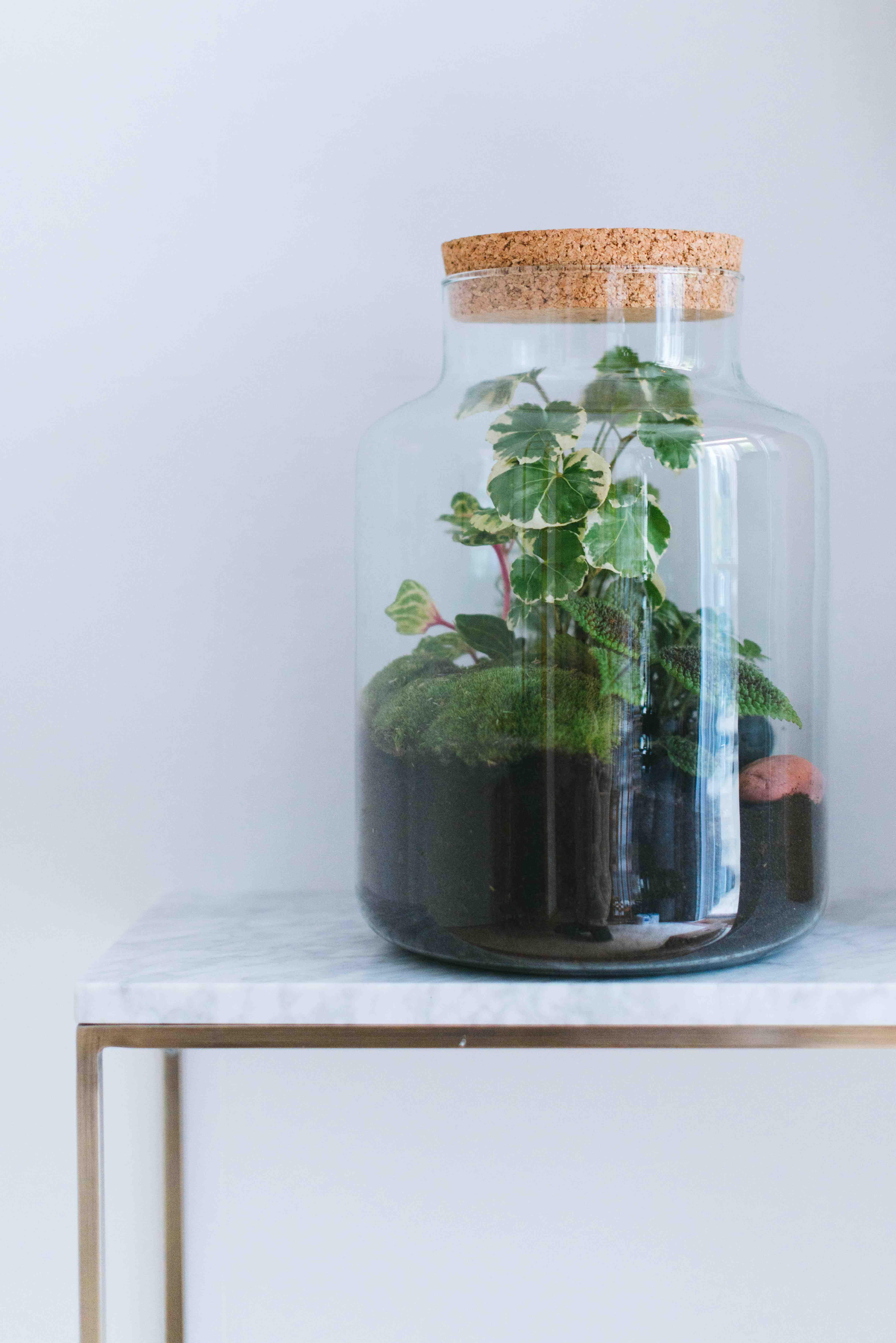 végétalisation bureau paris plantes terrarium