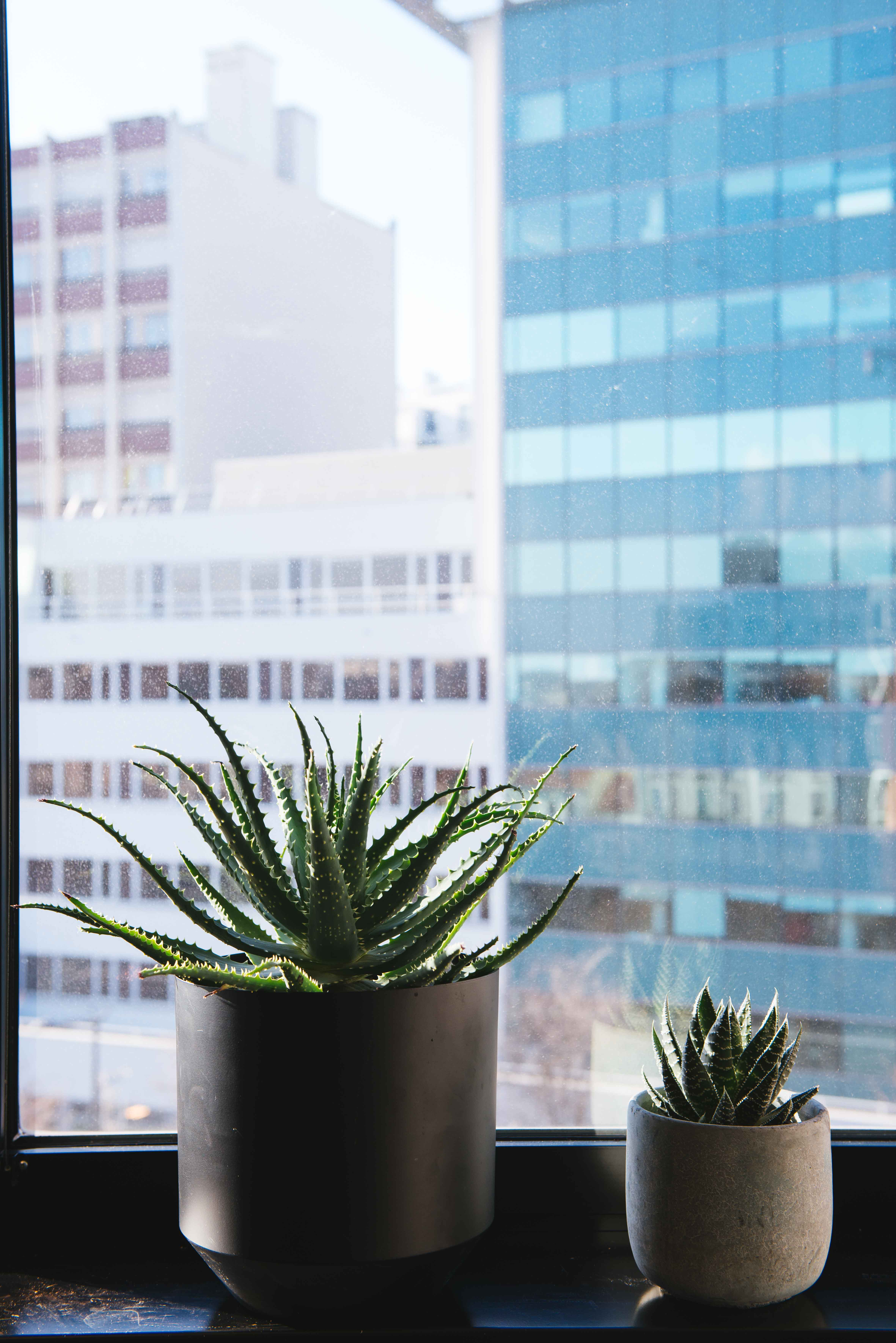 paysagisme intérieur plantes vertes bureau