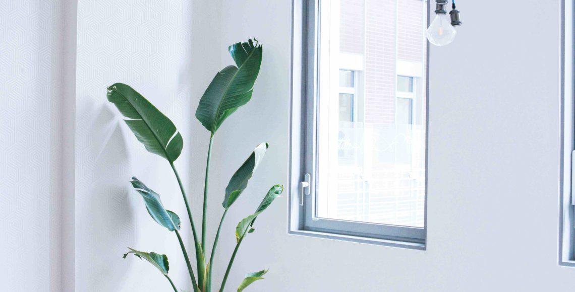 végétalisation bureau commerce paris sweet jungle strelitzia