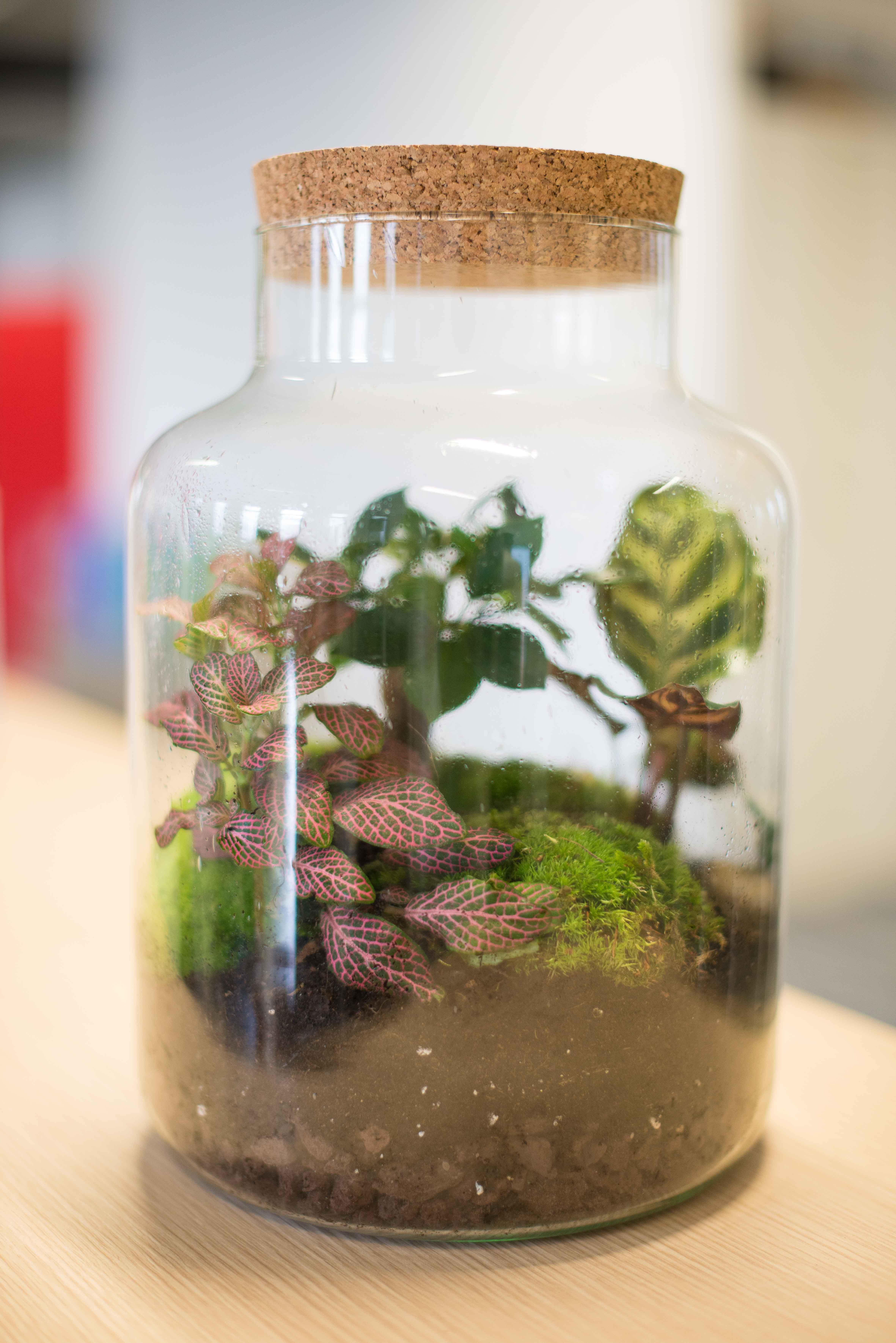 végétalisation bureau commerce paris sweet jungle terrarium