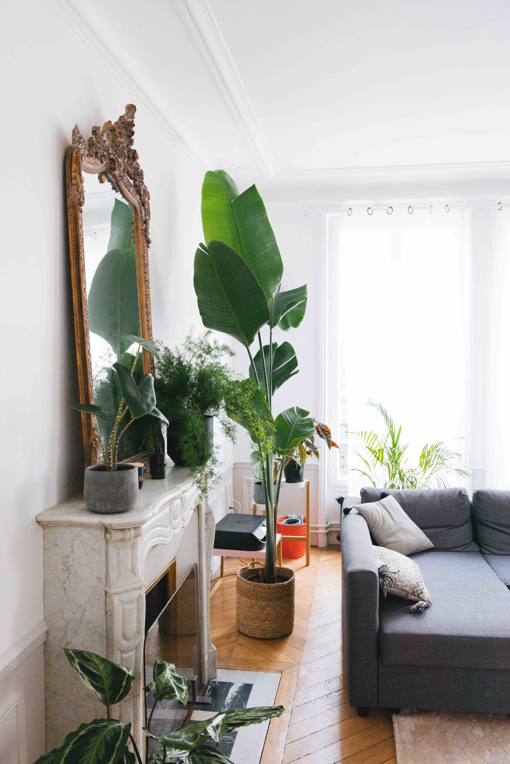 grande plante verte d'intérieur