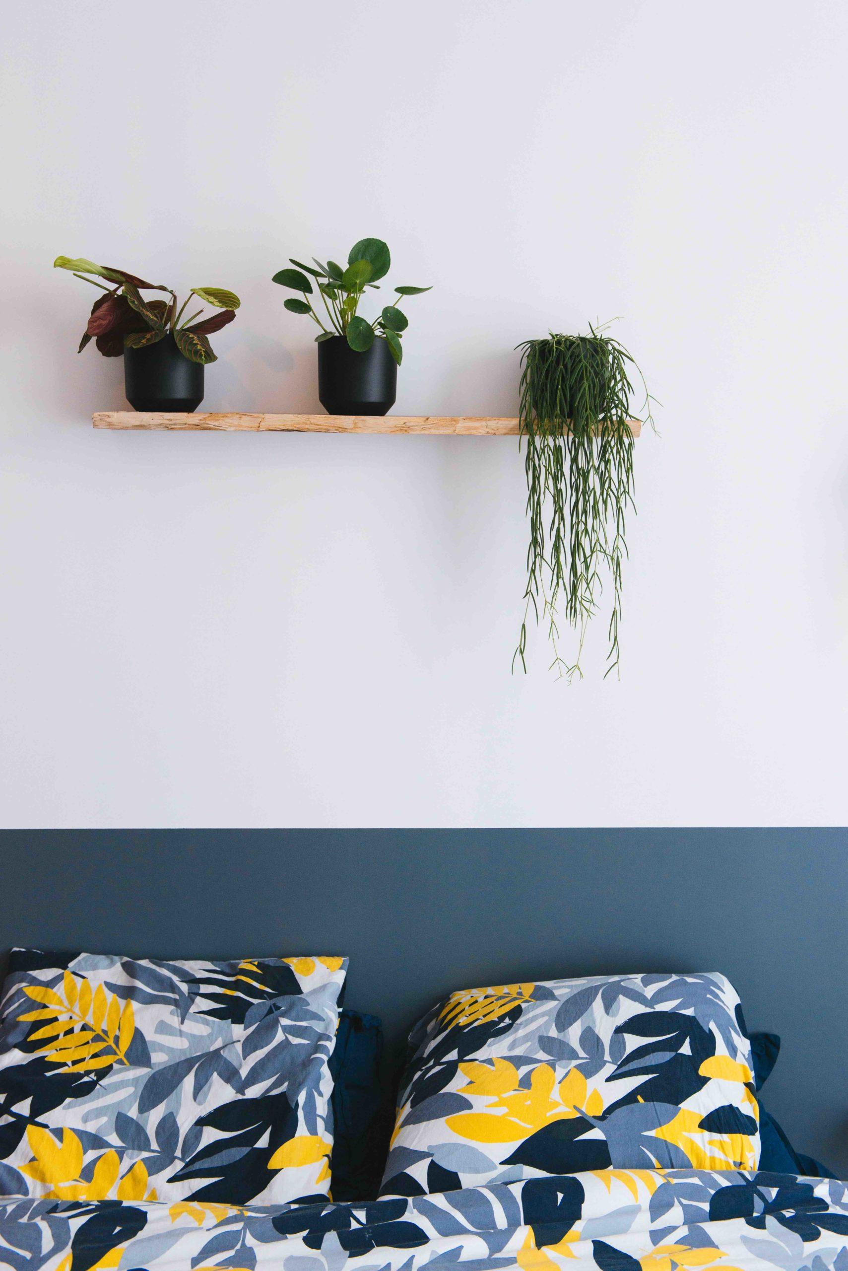 plantes vertes chambre